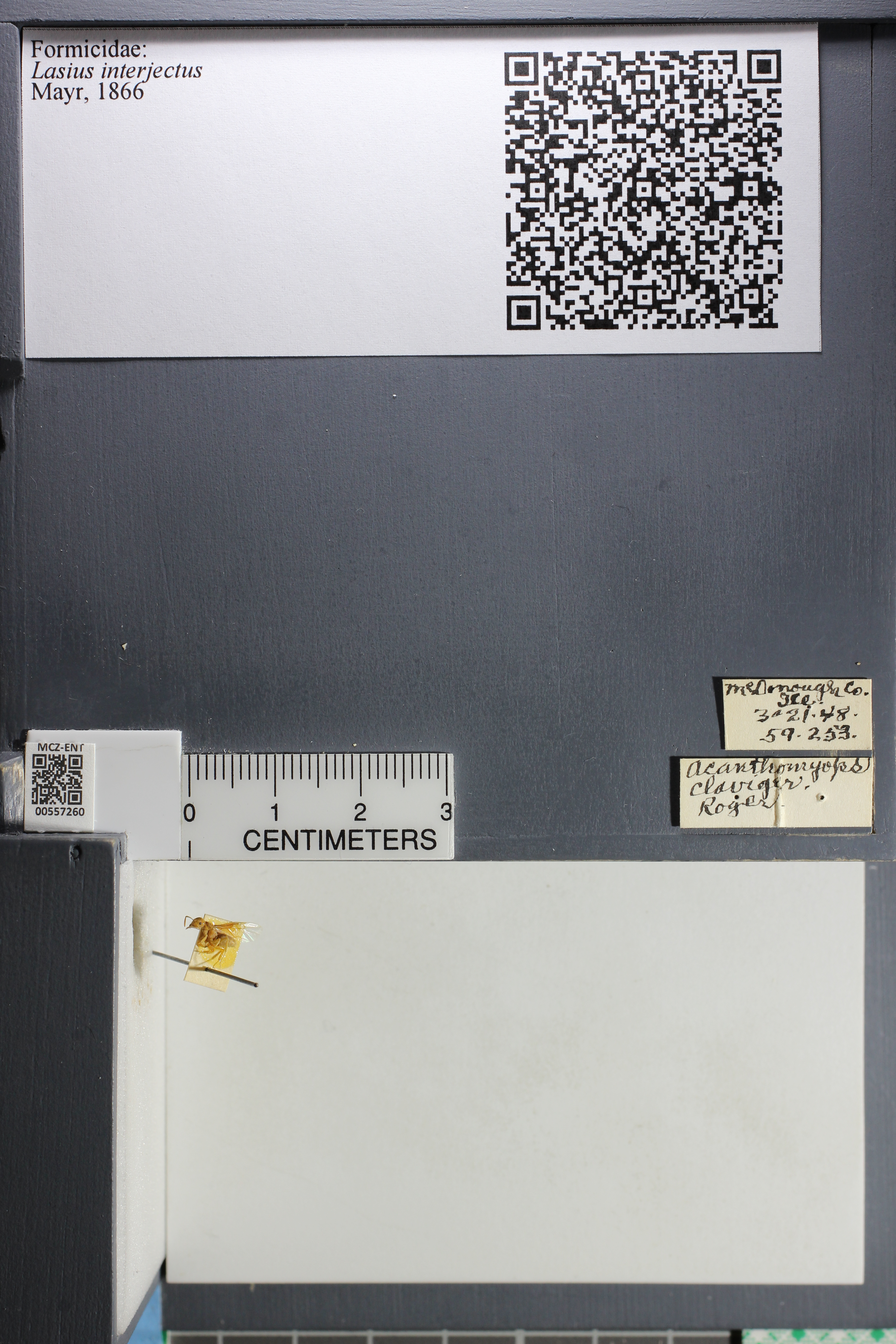 http://mczbase.mcz.harvard.edu/specimen_images/ent-formicidae/datashot/2015_04_30/IMG_322617.JPG