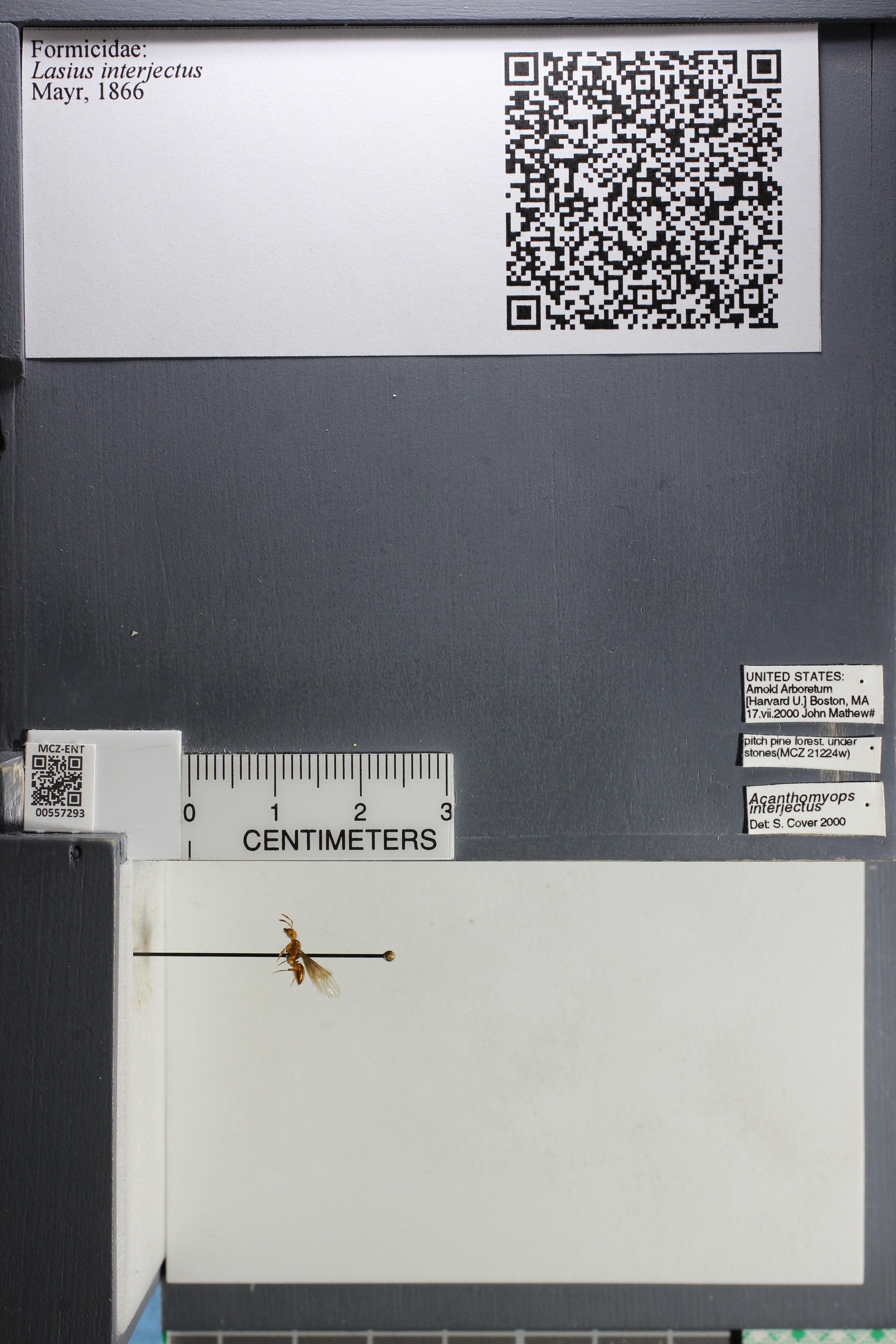 http://mczbase.mcz.harvard.edu/specimen_images/ent-formicidae/datashot/2015_04_30/IMG_322652.JPG