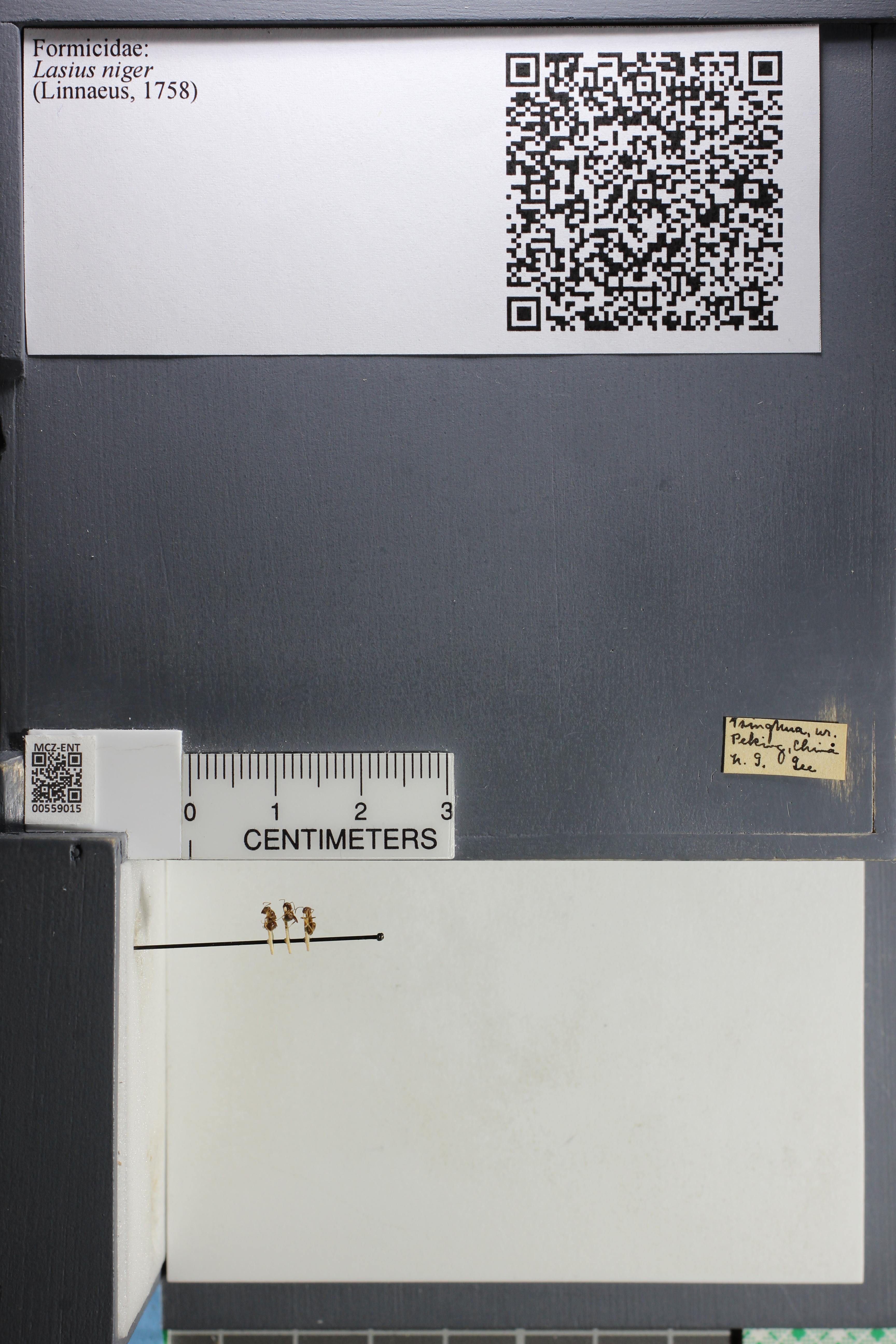 http://mczbase.mcz.harvard.edu/specimen_images/ent-formicidae/datashot/2015_05_08/IMG_324000.JPG
