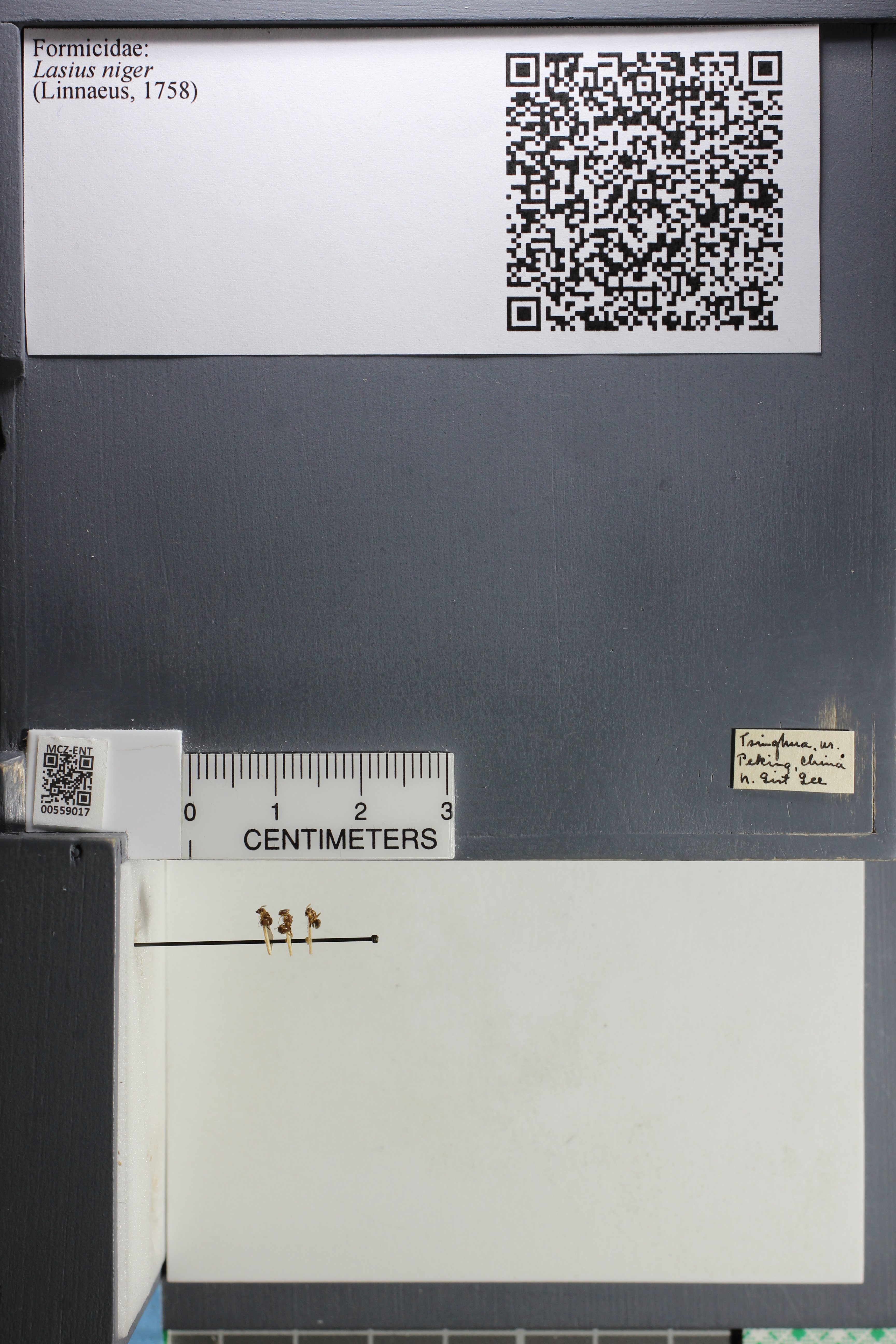 http://mczbase.mcz.harvard.edu/specimen_images/ent-formicidae/datashot/2015_05_08/IMG_324002.JPG