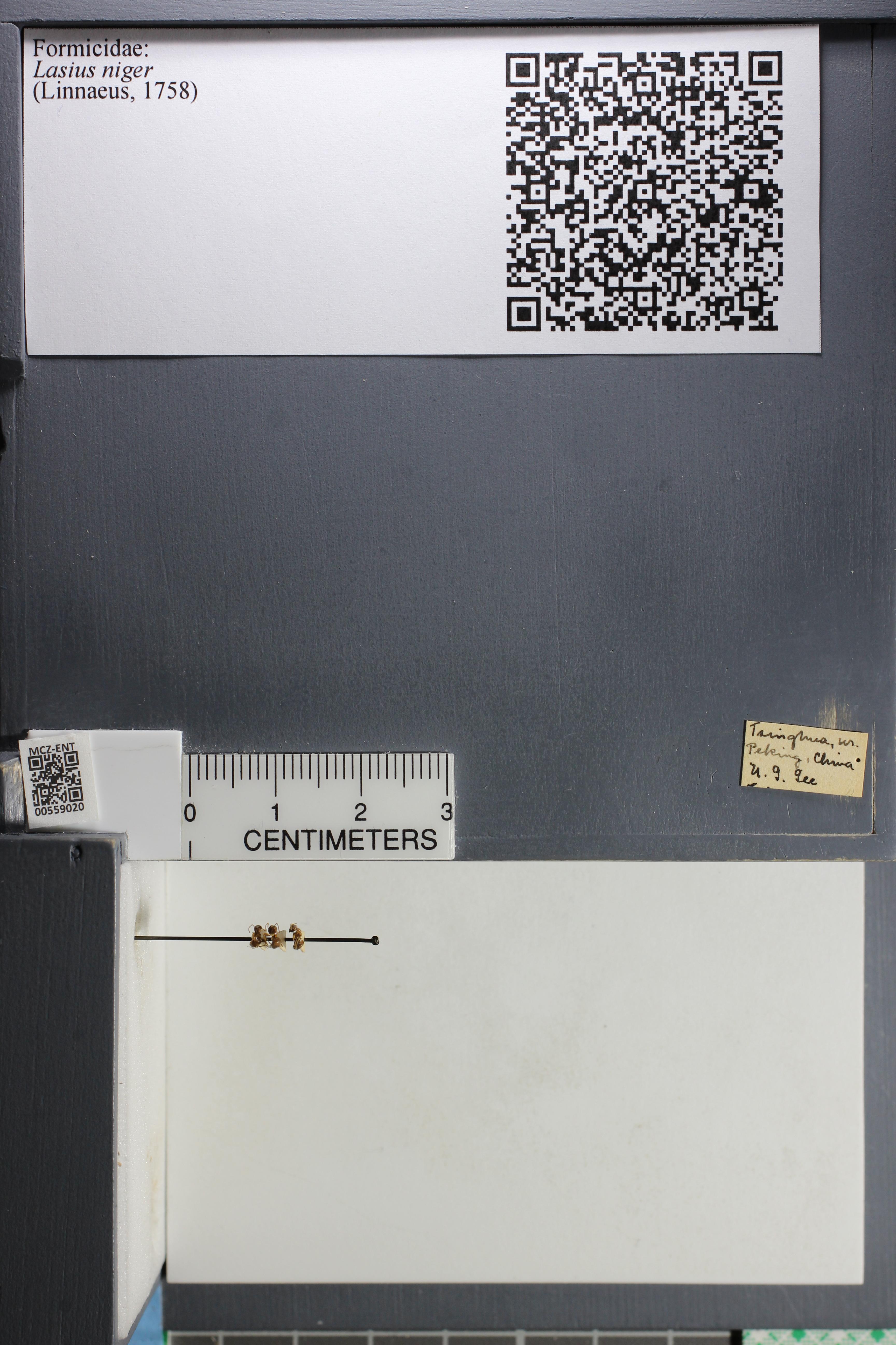 http://mczbase.mcz.harvard.edu/specimen_images/ent-formicidae/datashot/2015_05_08/IMG_324005.JPG