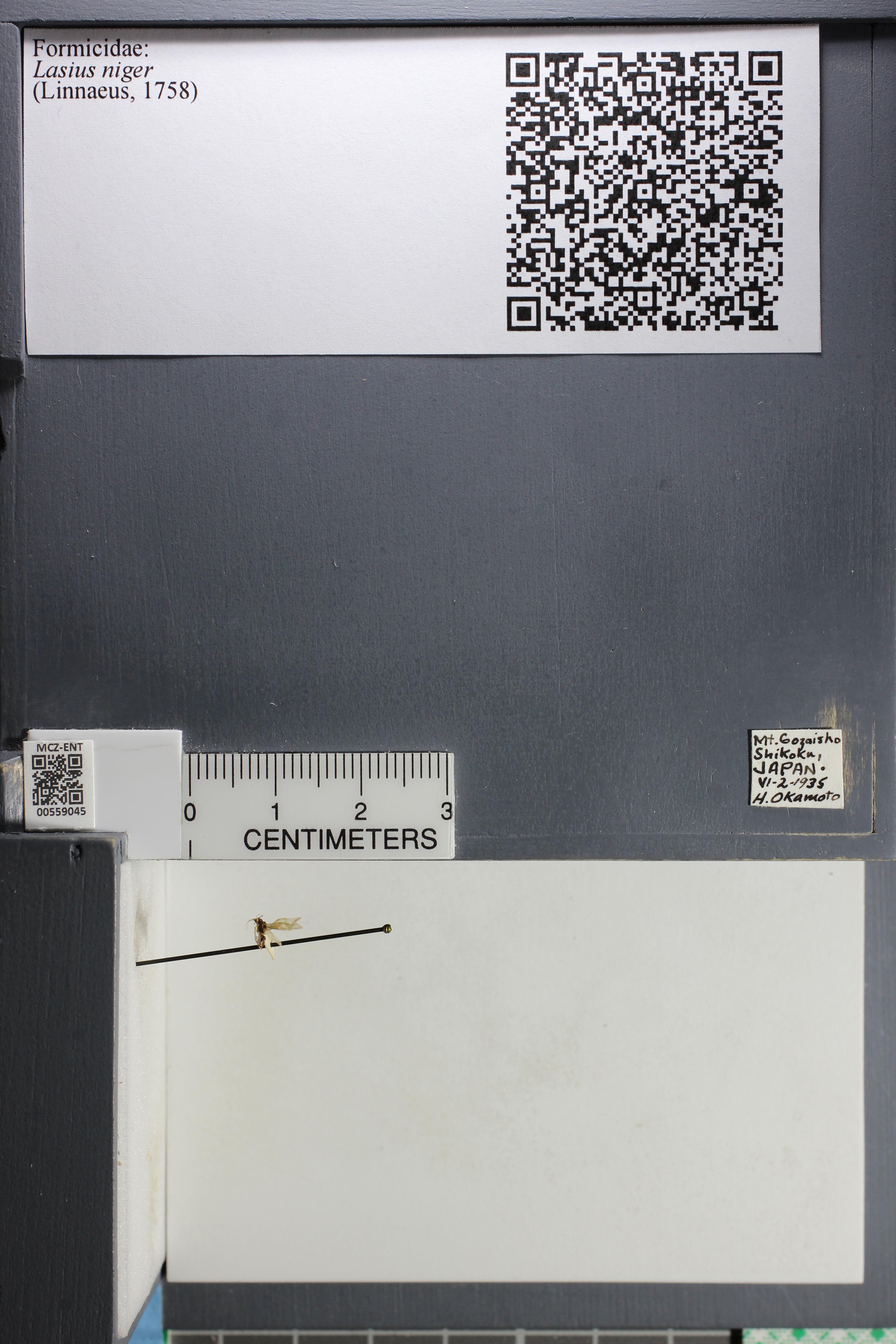 http://mczbase.mcz.harvard.edu/specimen_images/ent-formicidae/datashot/2015_05_08/IMG_324033.JPG