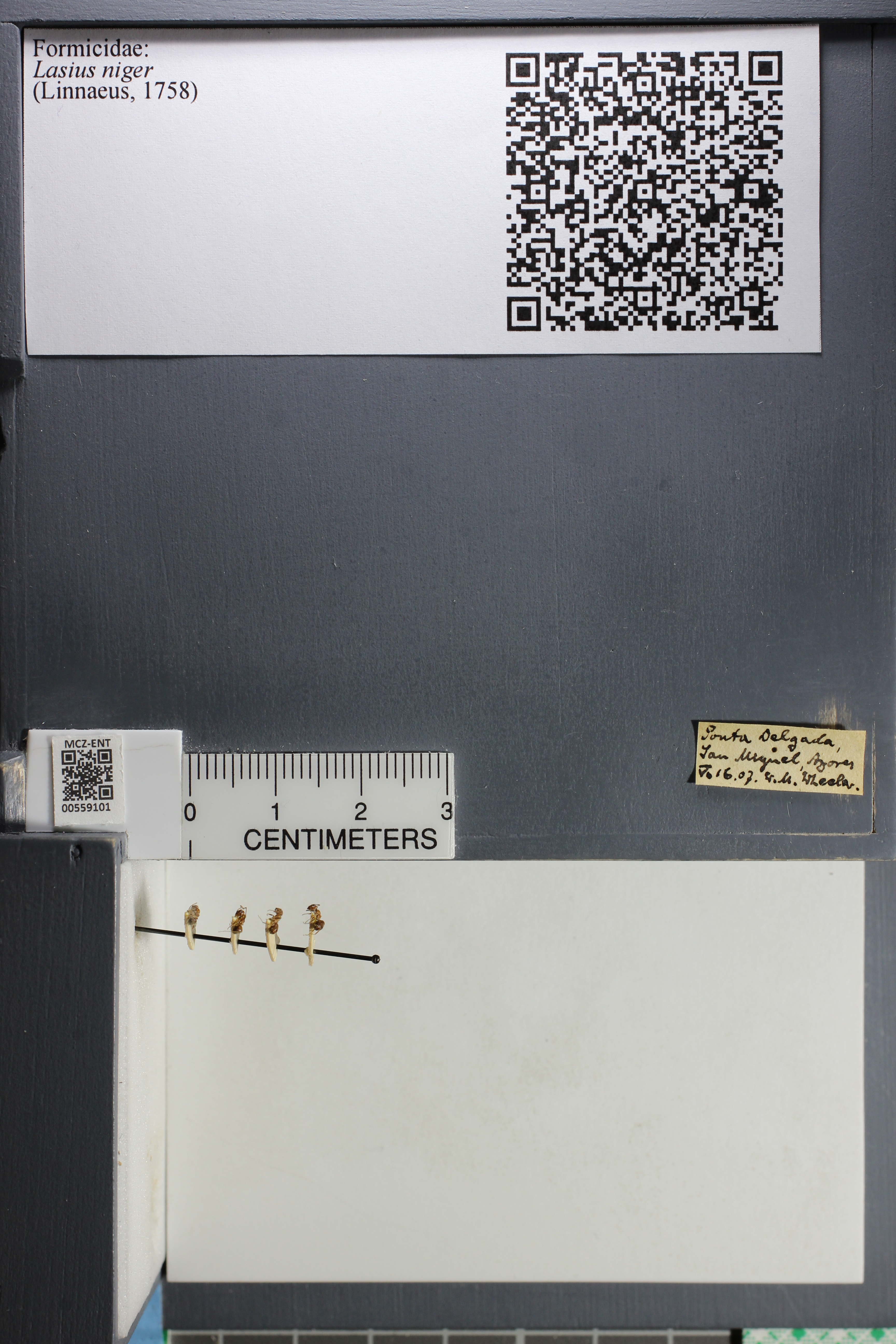 http://mczbase.mcz.harvard.edu/specimen_images/ent-formicidae/datashot/2015_05_08/IMG_324091.JPG
