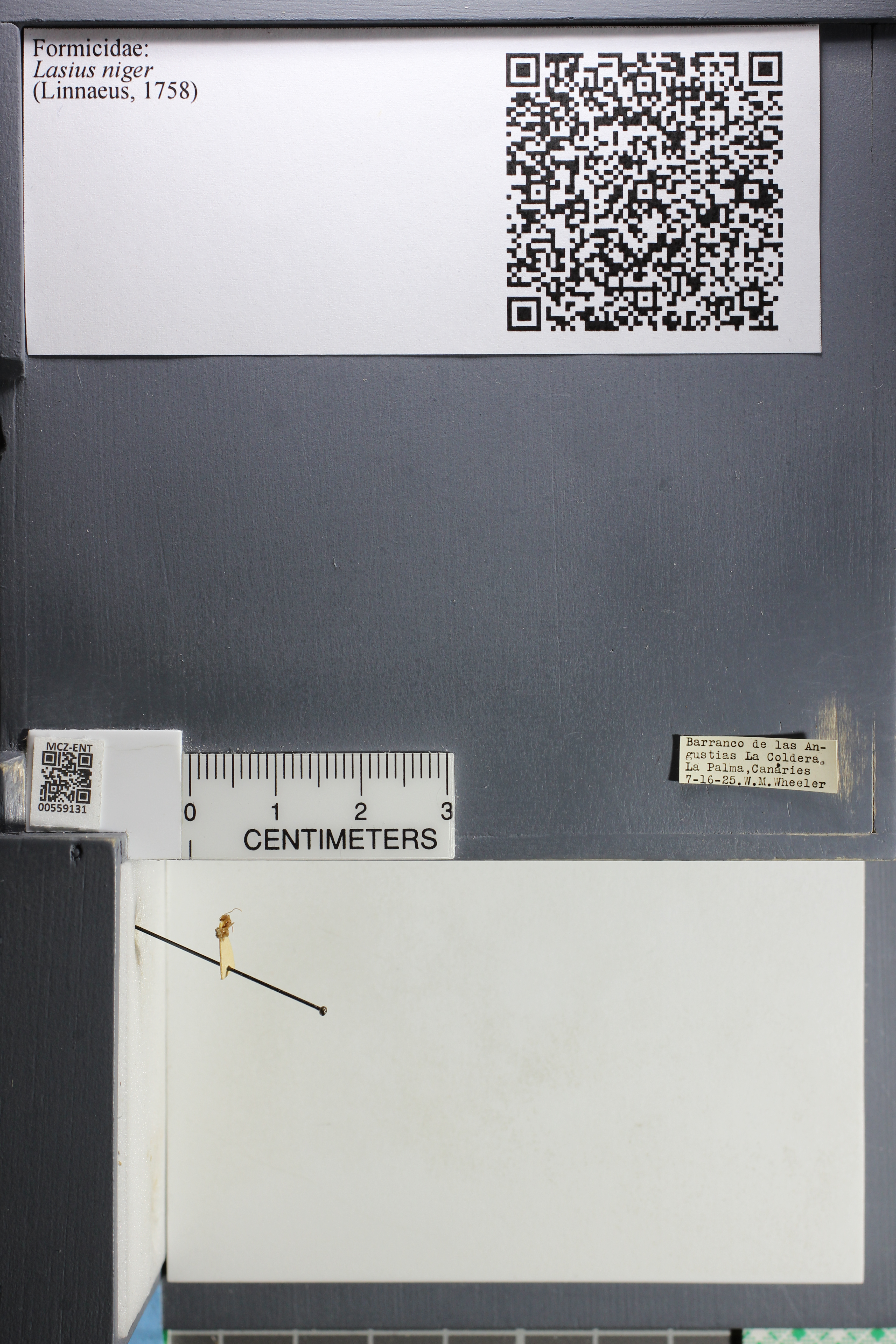http://mczbase.mcz.harvard.edu/specimen_images/ent-formicidae/datashot/2015_05_08/IMG_324121.JPG