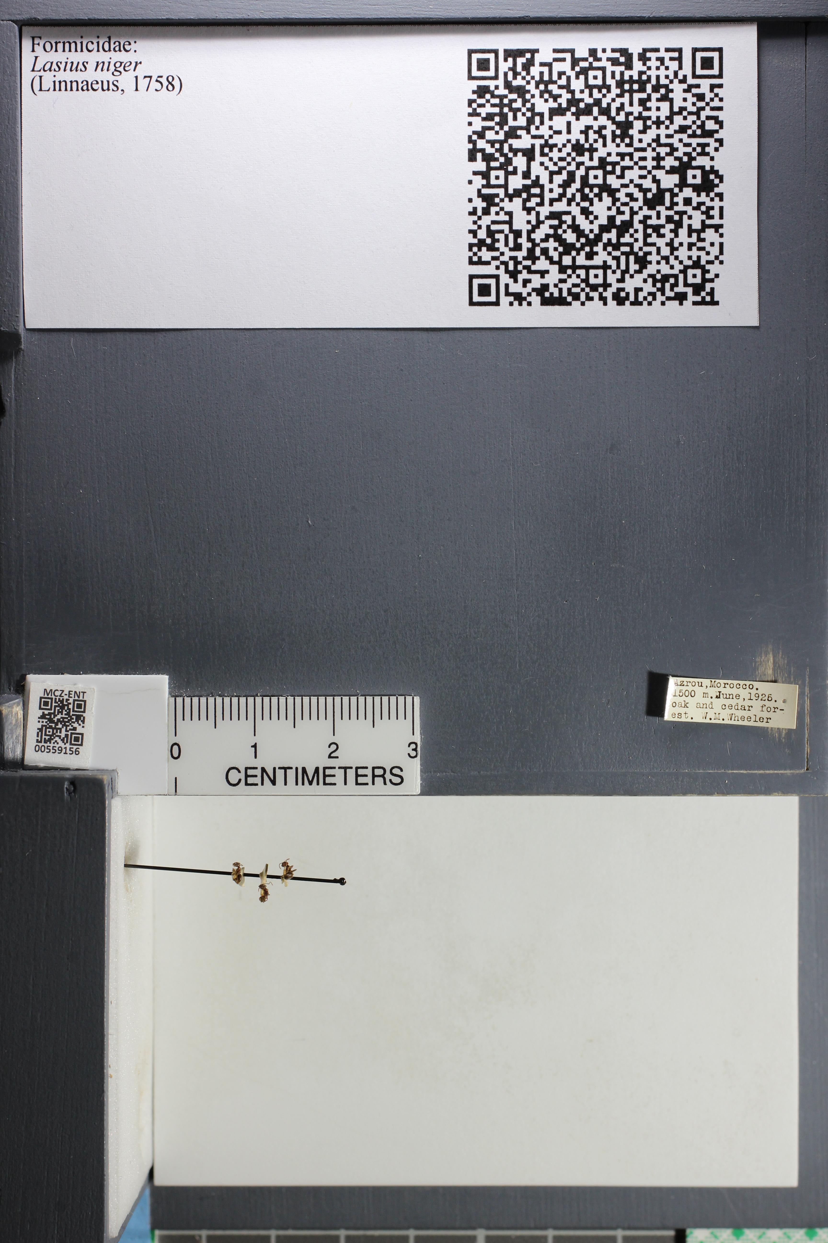 http://mczbase.mcz.harvard.edu/specimen_images/ent-formicidae/datashot/2015_05_08/IMG_324147.JPG
