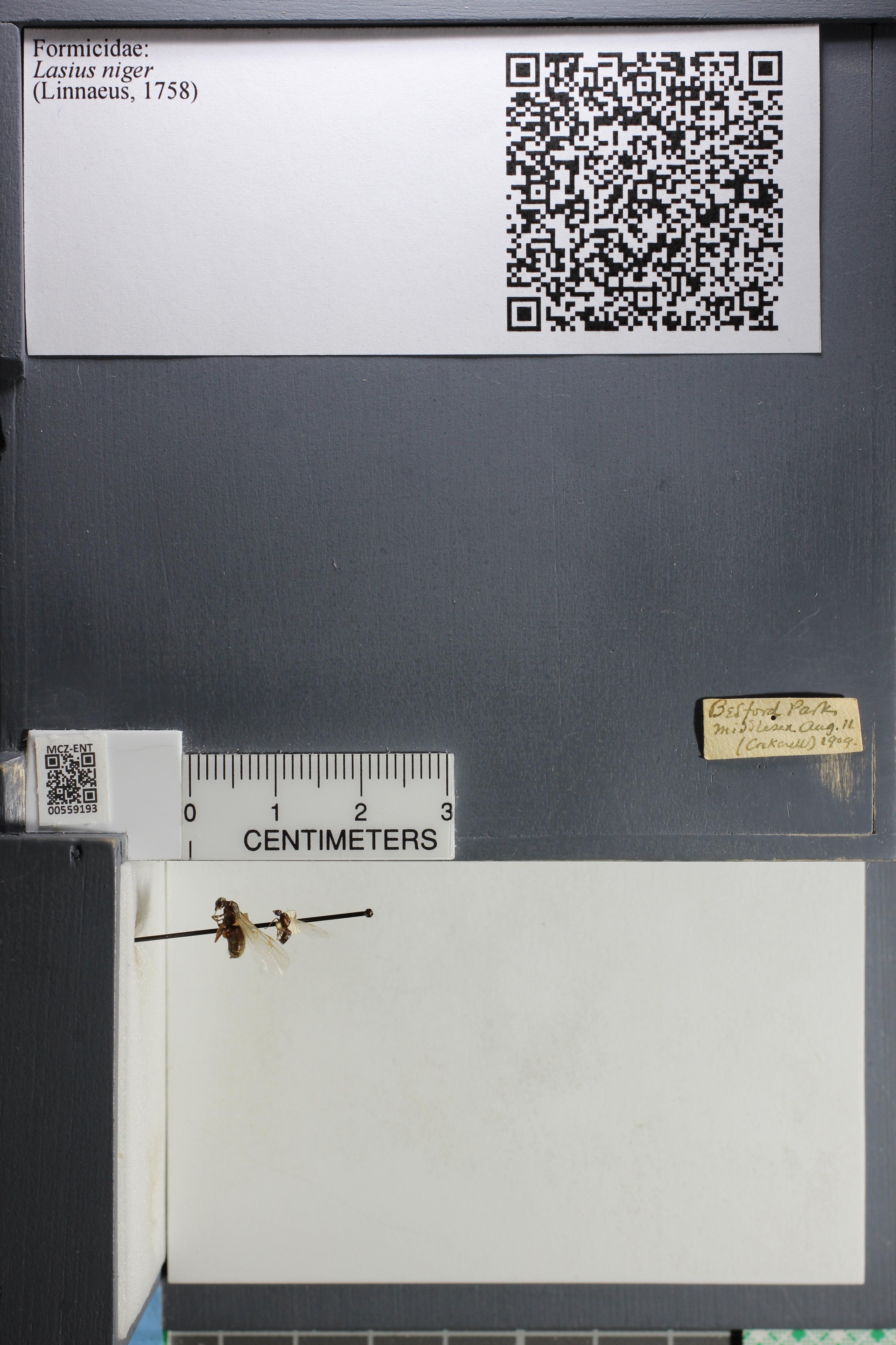 http://mczbase.mcz.harvard.edu/specimen_images/ent-formicidae/datashot/2015_05_08/IMG_324185.JPG