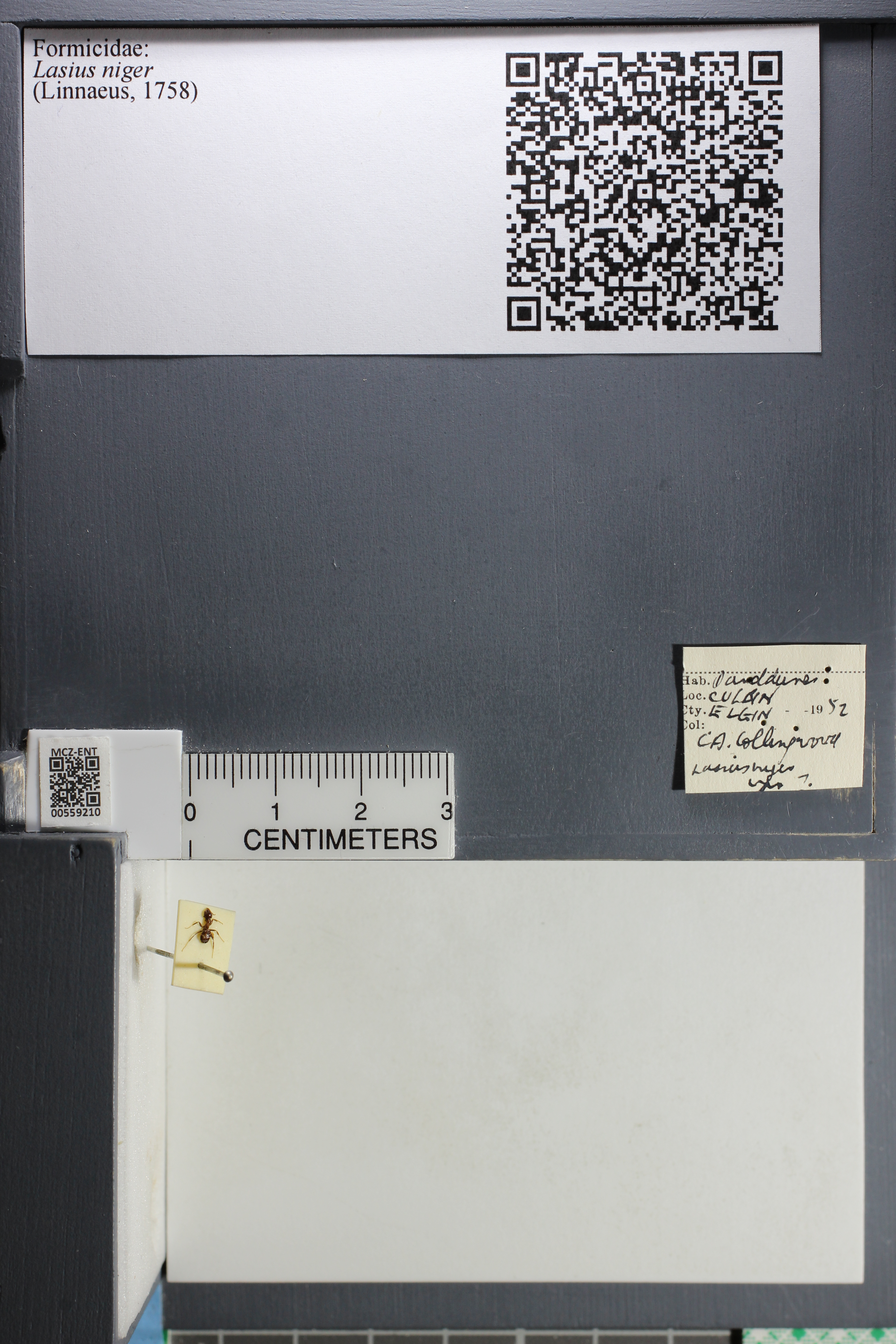 http://mczbase.mcz.harvard.edu/specimen_images/ent-formicidae/datashot/2015_05_08/IMG_324202.JPG