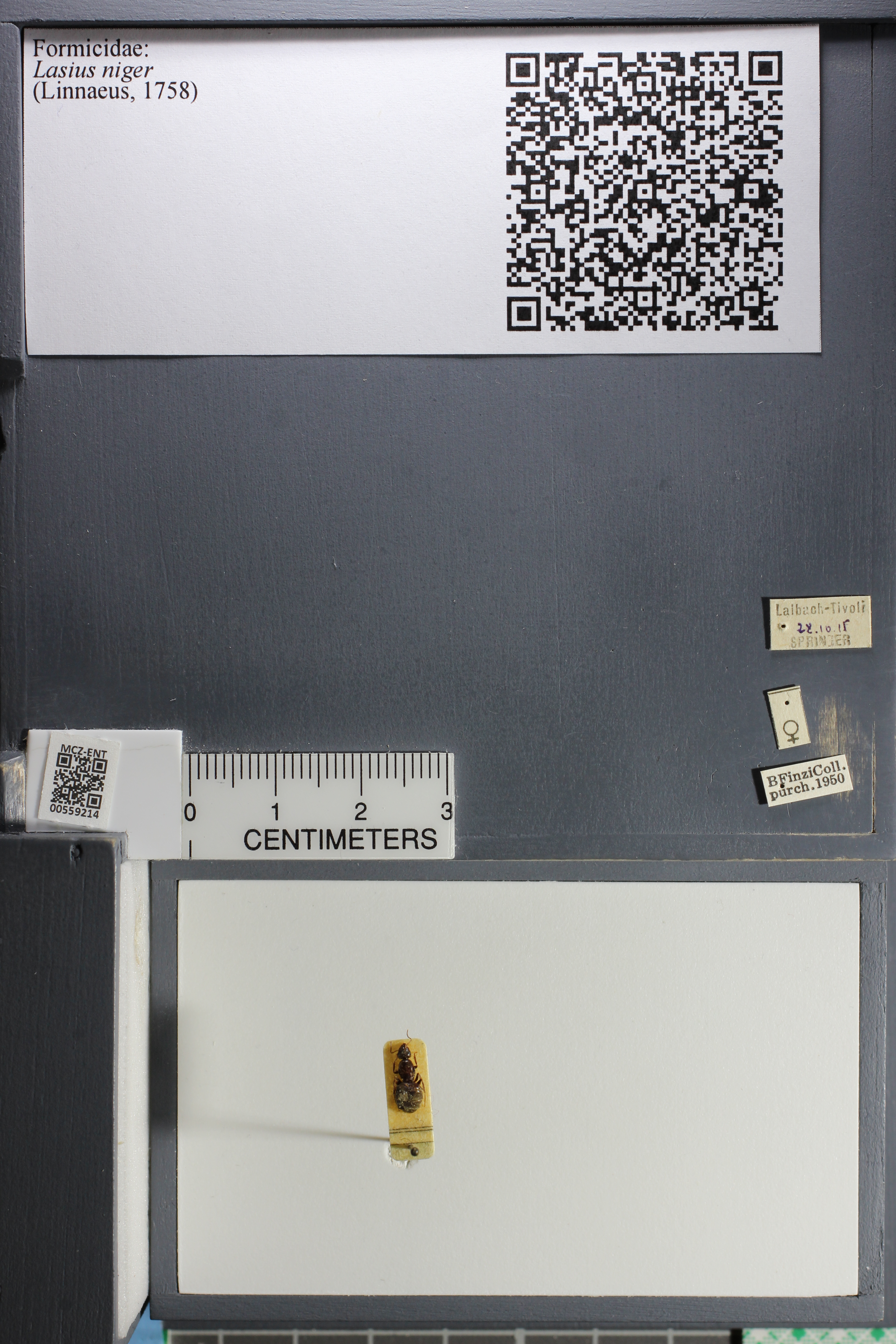 http://mczbase.mcz.harvard.edu/specimen_images/ent-formicidae/datashot/2015_05_08/IMG_324206.JPG