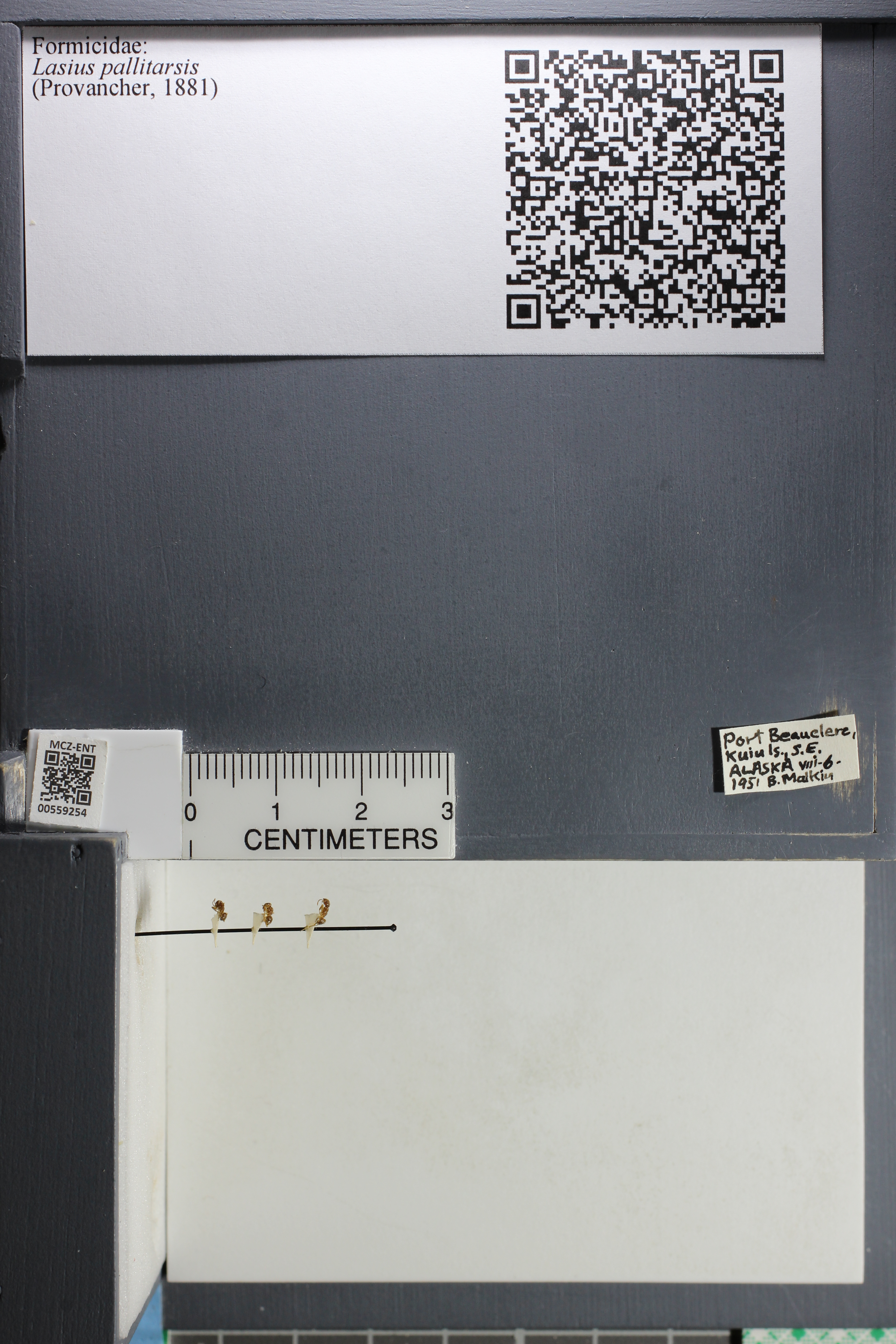 http://mczbase.mcz.harvard.edu/specimen_images/ent-formicidae/datashot/2015_05_11/IMG_324248.JPG