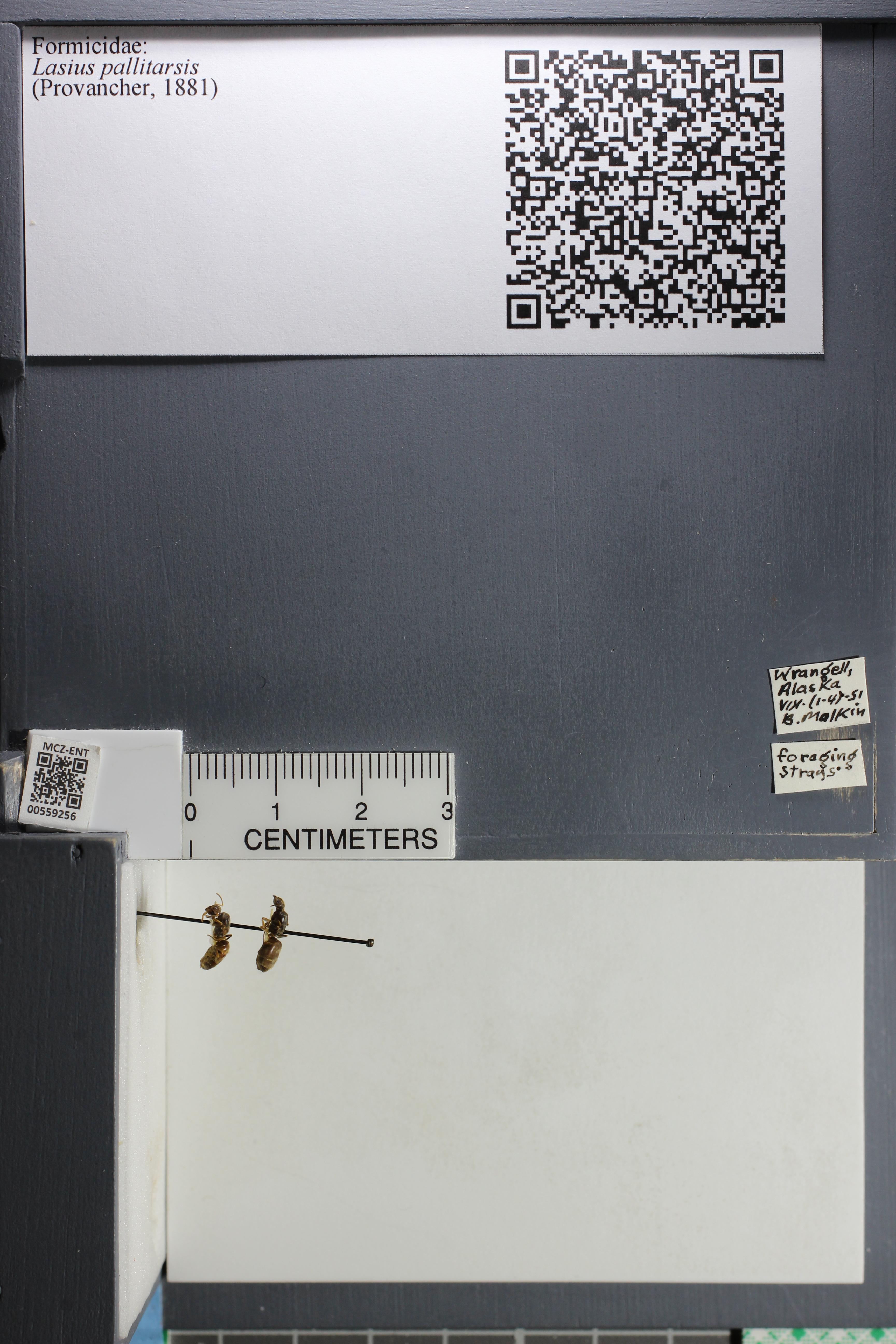http://mczbase.mcz.harvard.edu/specimen_images/ent-formicidae/datashot/2015_05_11/IMG_324250.JPG