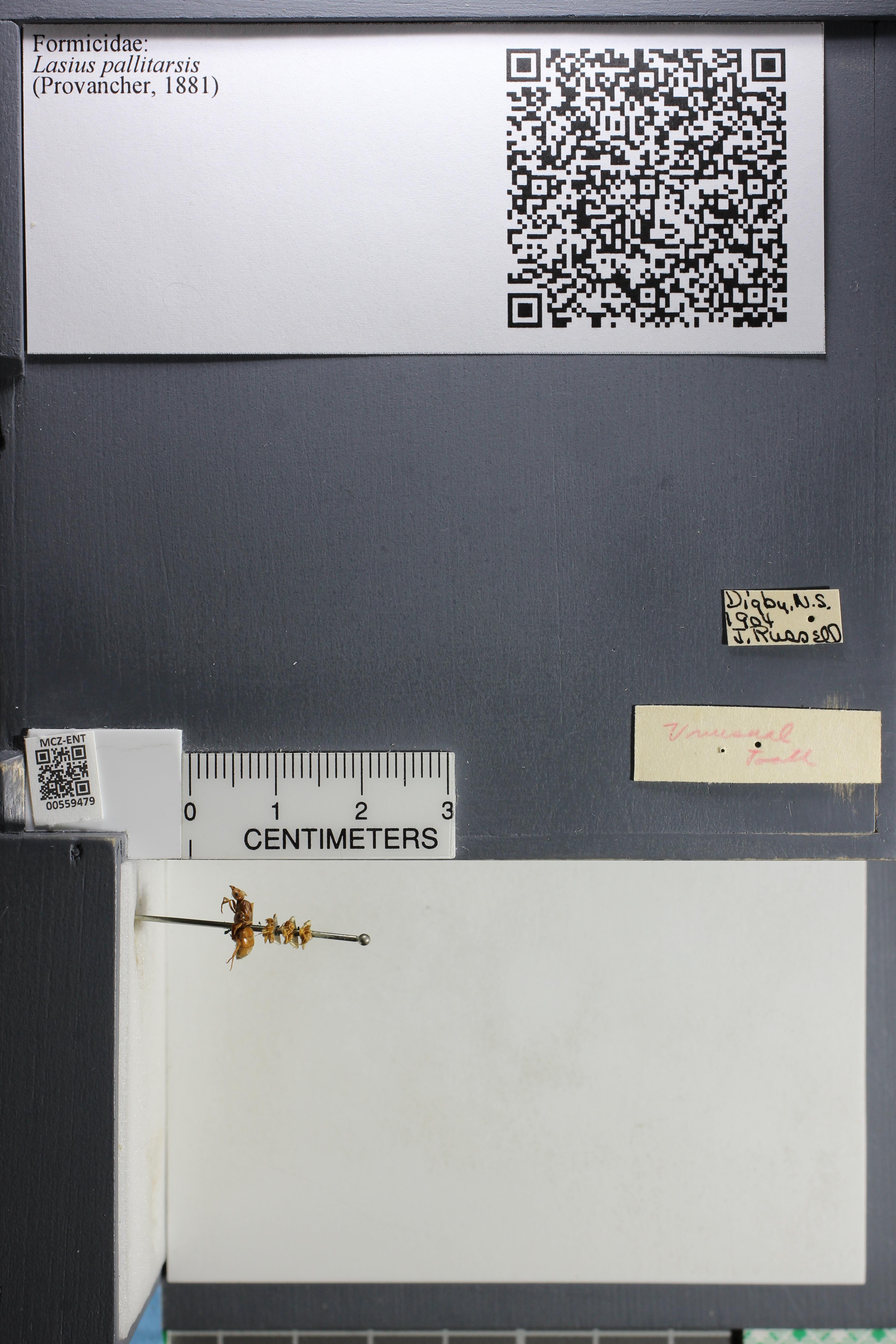 http://mczbase.mcz.harvard.edu/specimen_images/ent-formicidae/datashot/2015_05_12/IMG_324480.JPG