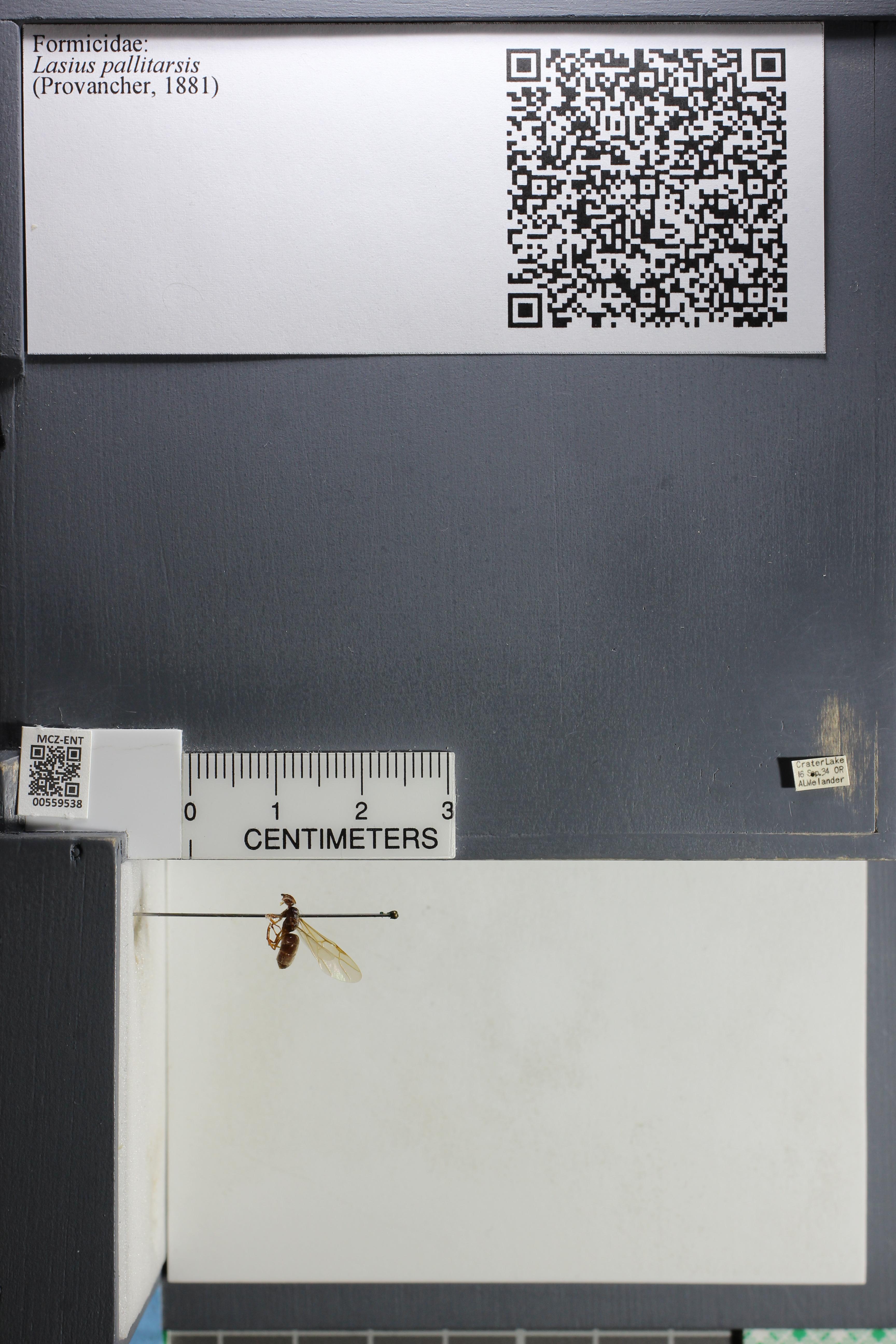 http://mczbase.mcz.harvard.edu/specimen_images/ent-formicidae/datashot/2015_05_12/IMG_324545.JPG