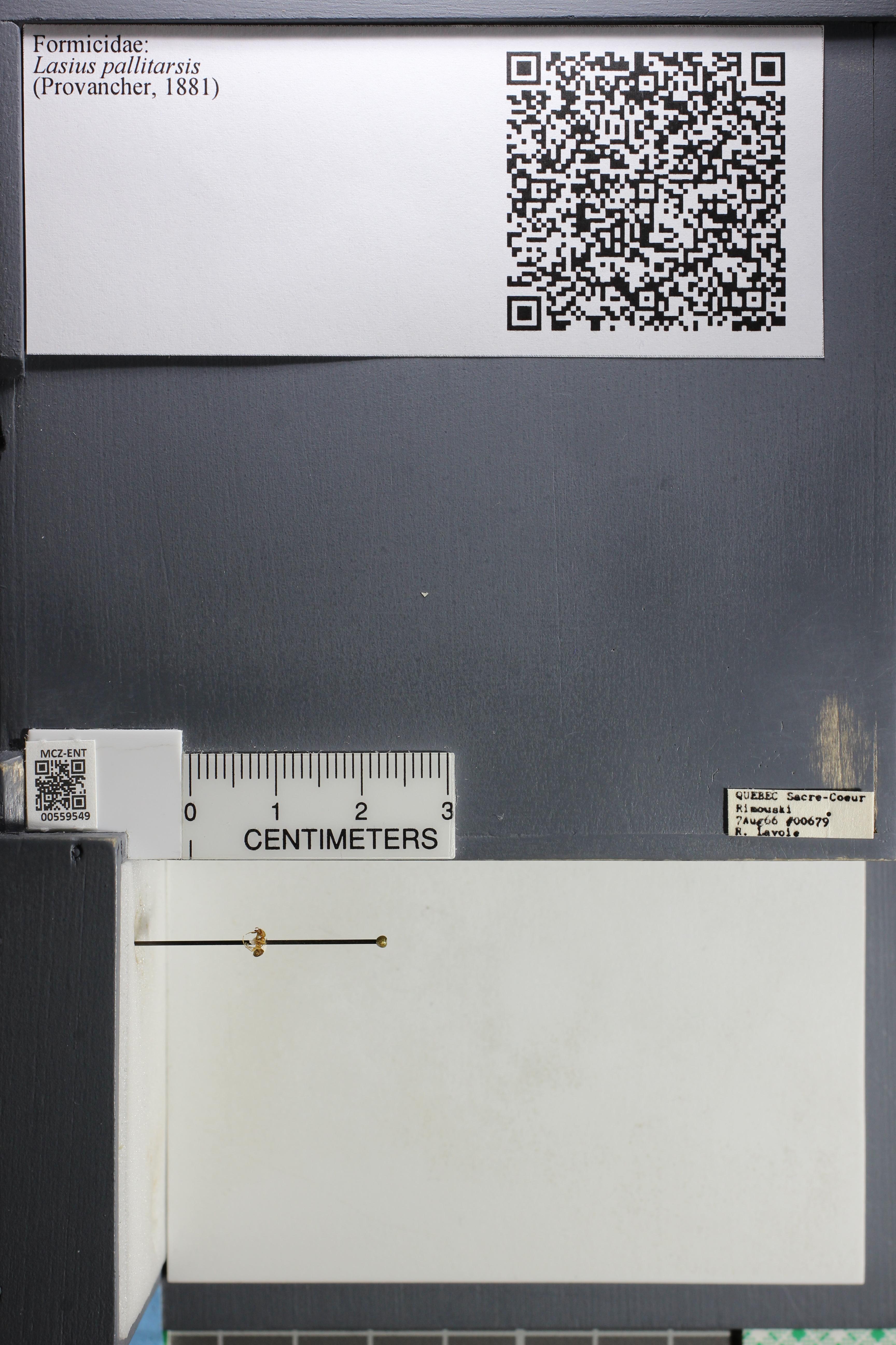 http://mczbase.mcz.harvard.edu/specimen_images/ent-formicidae/datashot/2015_05_12/IMG_324556.JPG