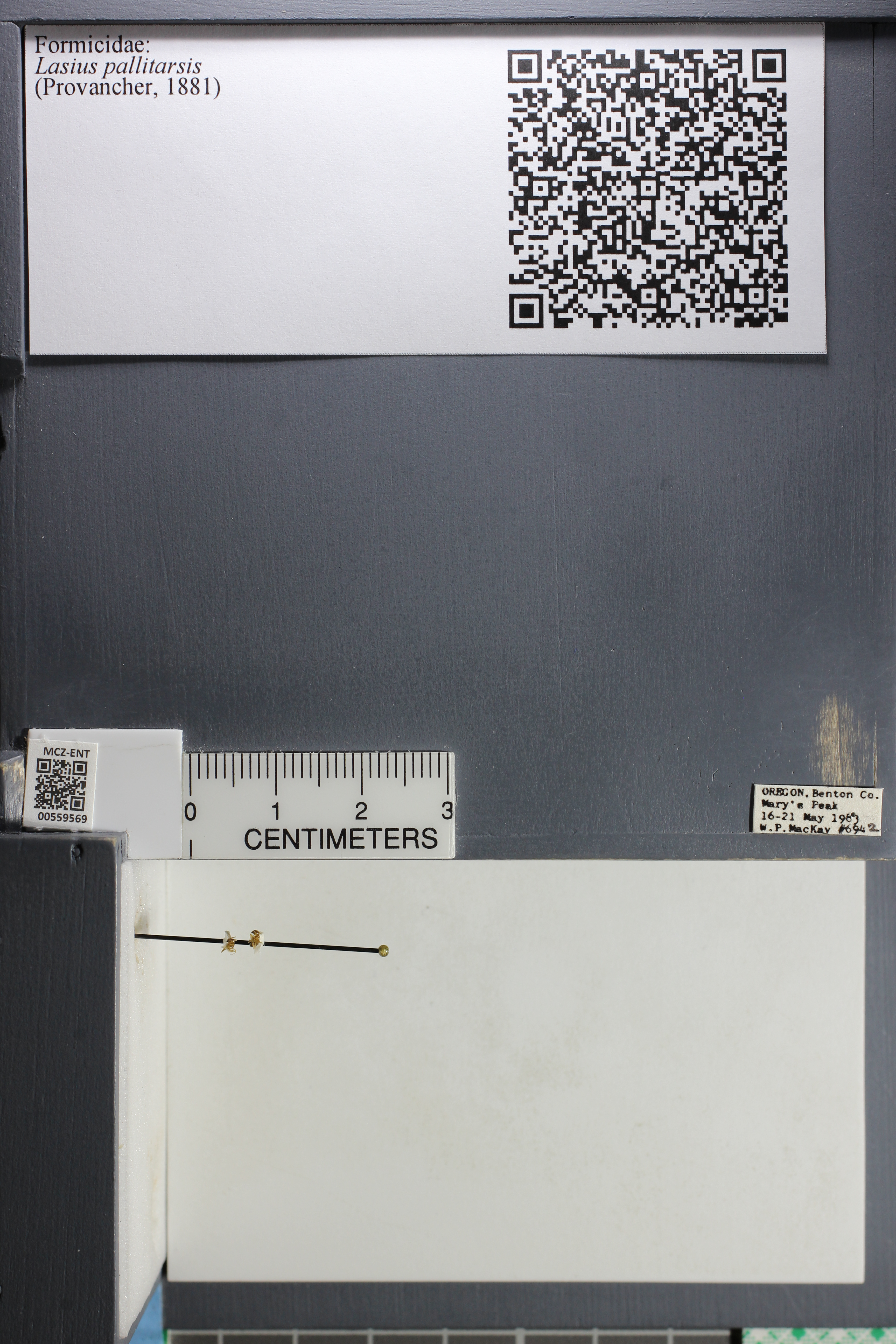 http://mczbase.mcz.harvard.edu/specimen_images/ent-formicidae/datashot/2015_05_12/IMG_324576.JPG