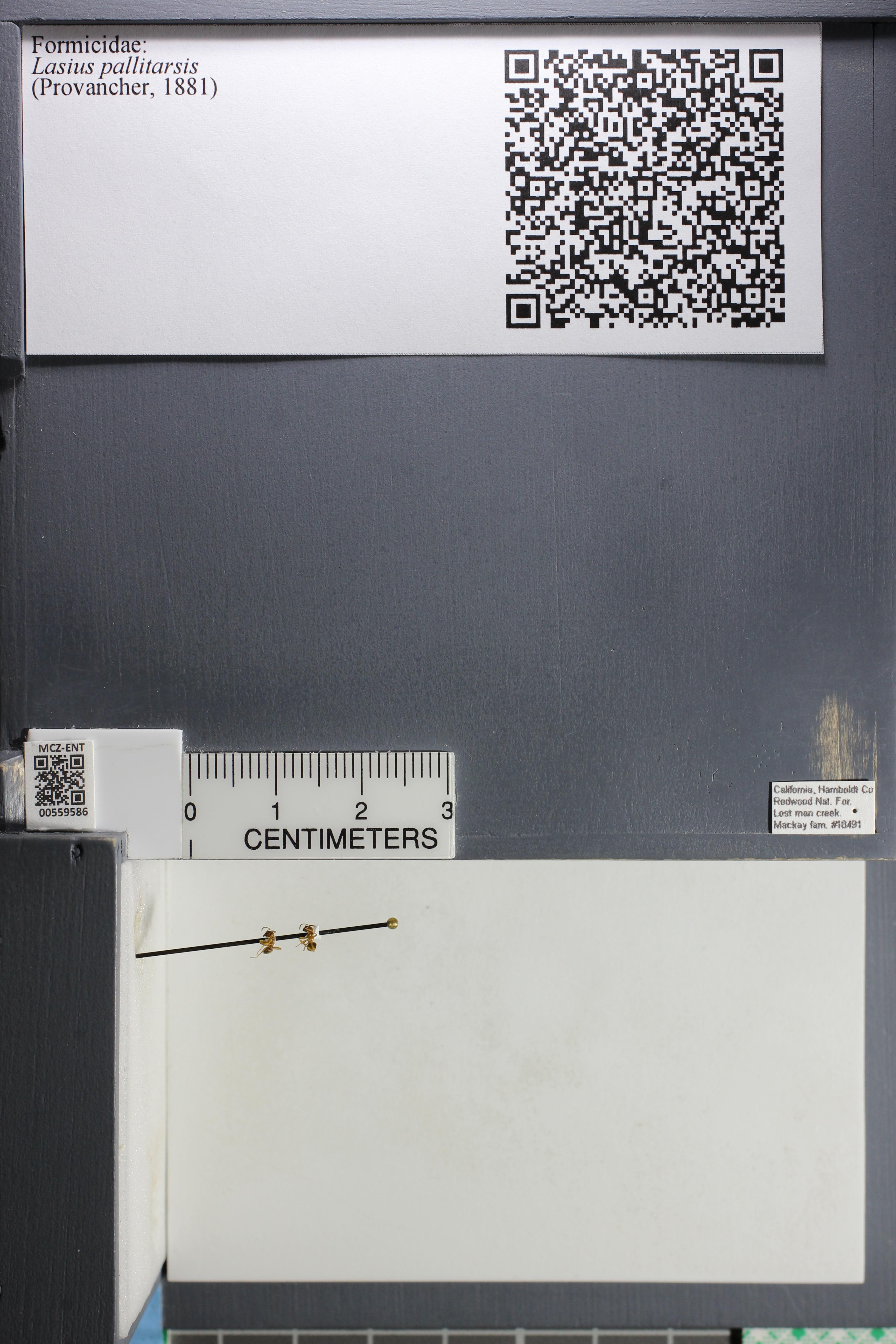 http://mczbase.mcz.harvard.edu/specimen_images/ent-formicidae/datashot/2015_05_12/IMG_324593.JPG