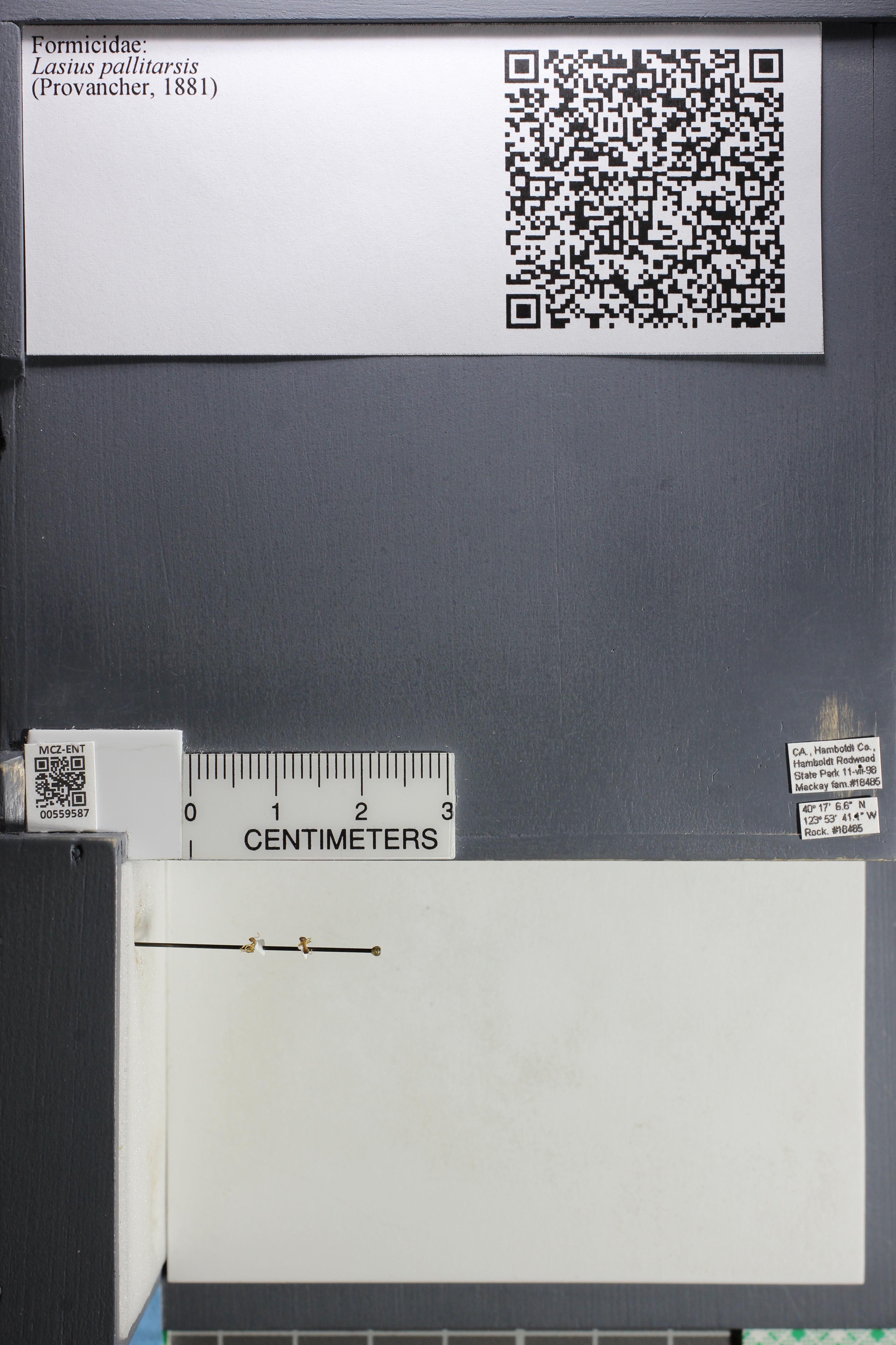 http://mczbase.mcz.harvard.edu/specimen_images/ent-formicidae/datashot/2015_05_12/IMG_324594.JPG