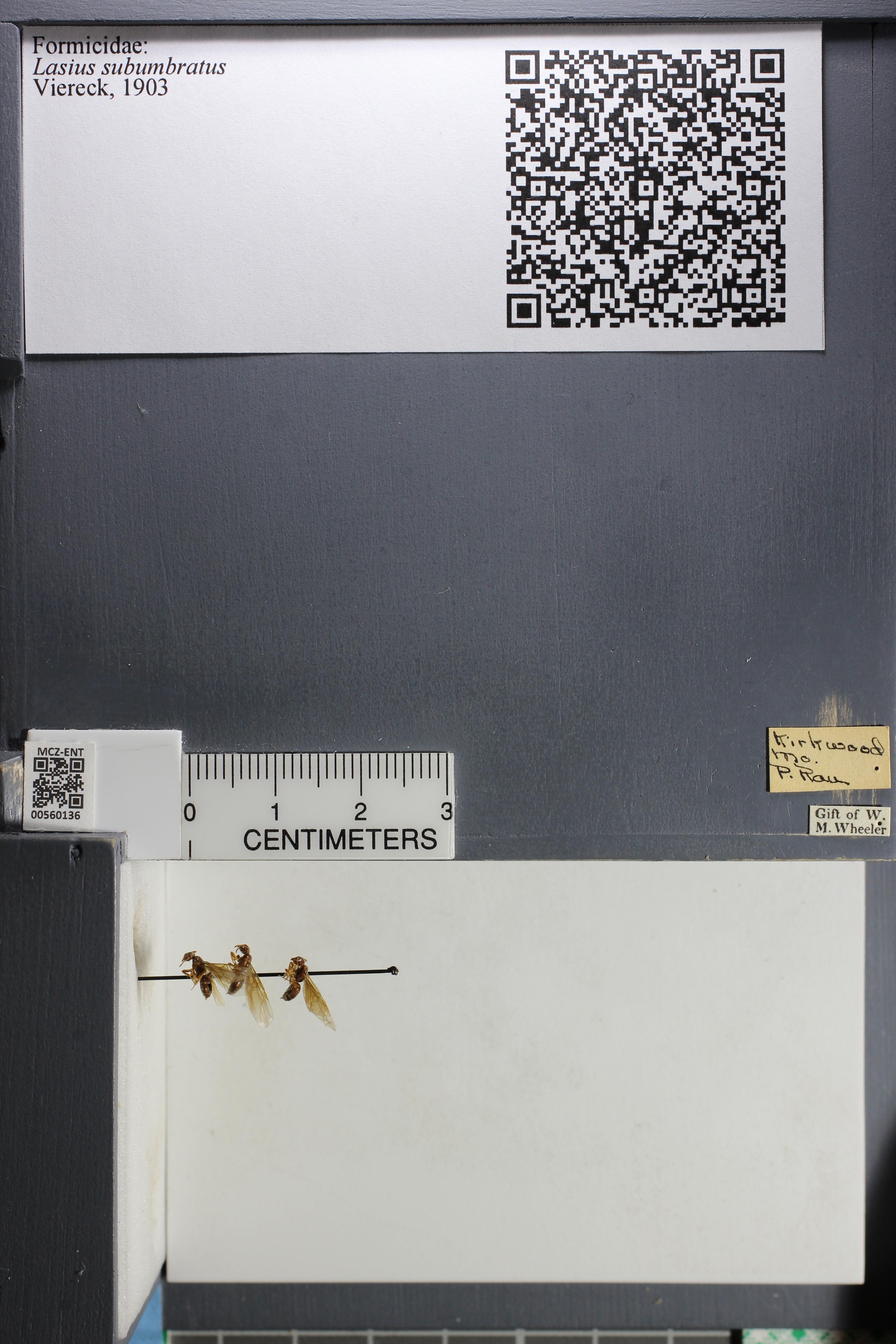 http://mczbase.mcz.harvard.edu/specimen_images/ent-formicidae/datashot/2015_05_14/IMG_325189.JPG
