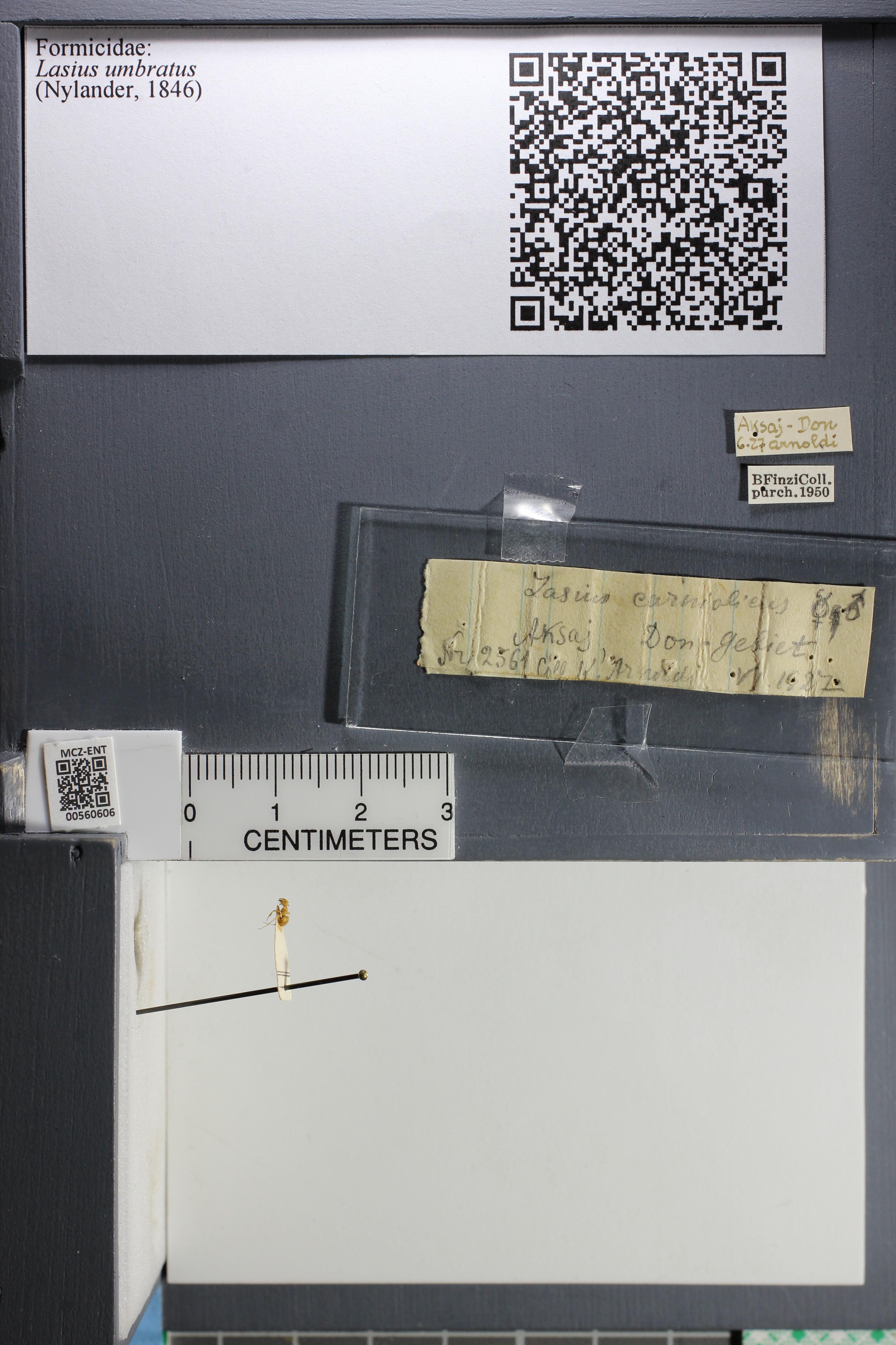 http://mczbase.mcz.harvard.edu/specimen_images/ent-formicidae/datashot/2015_05_19/IMG_325453.JPG