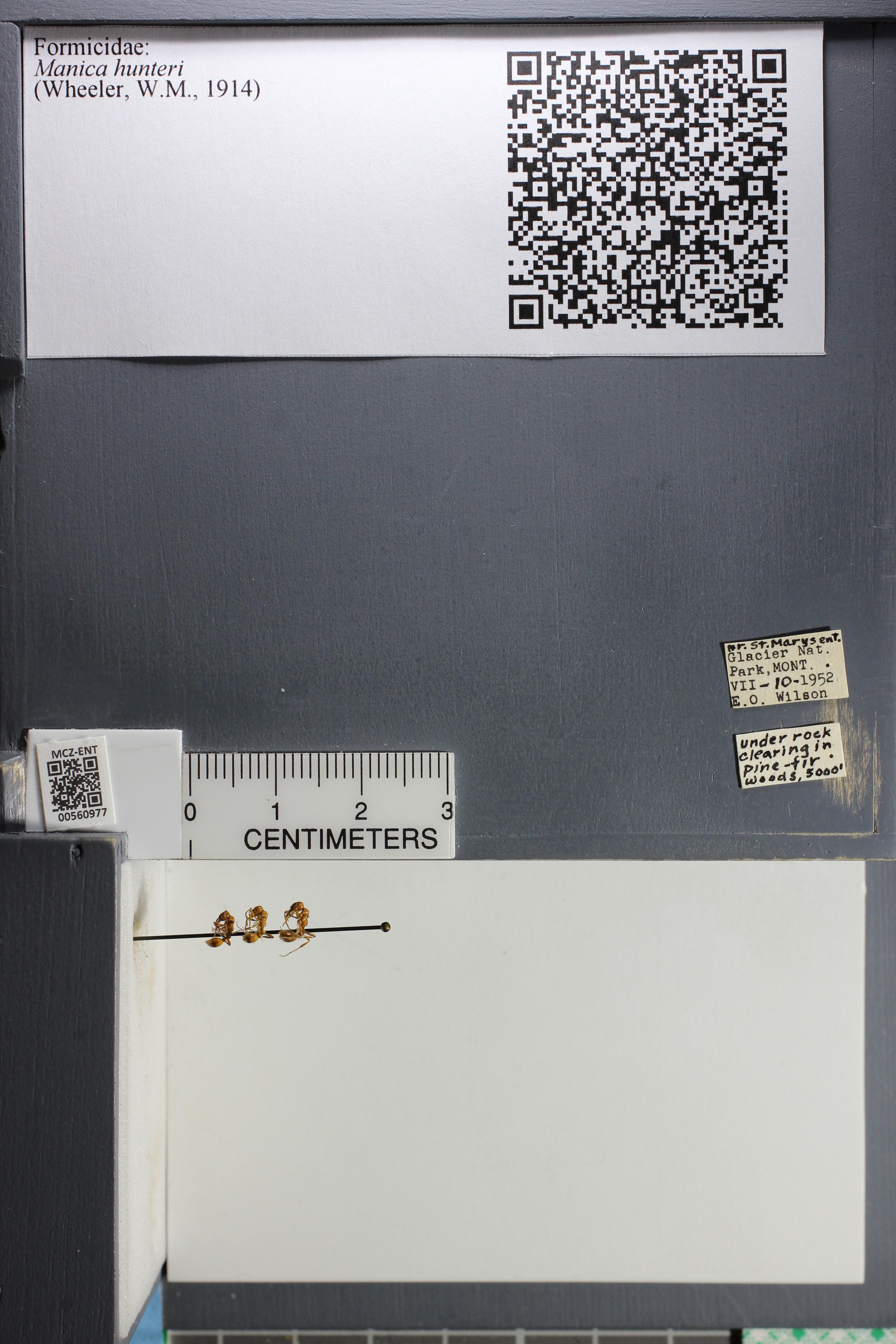 http://mczbase.mcz.harvard.edu/specimen_images/ent-formicidae/datashot/2015_05_20/IMG_325837.JPG