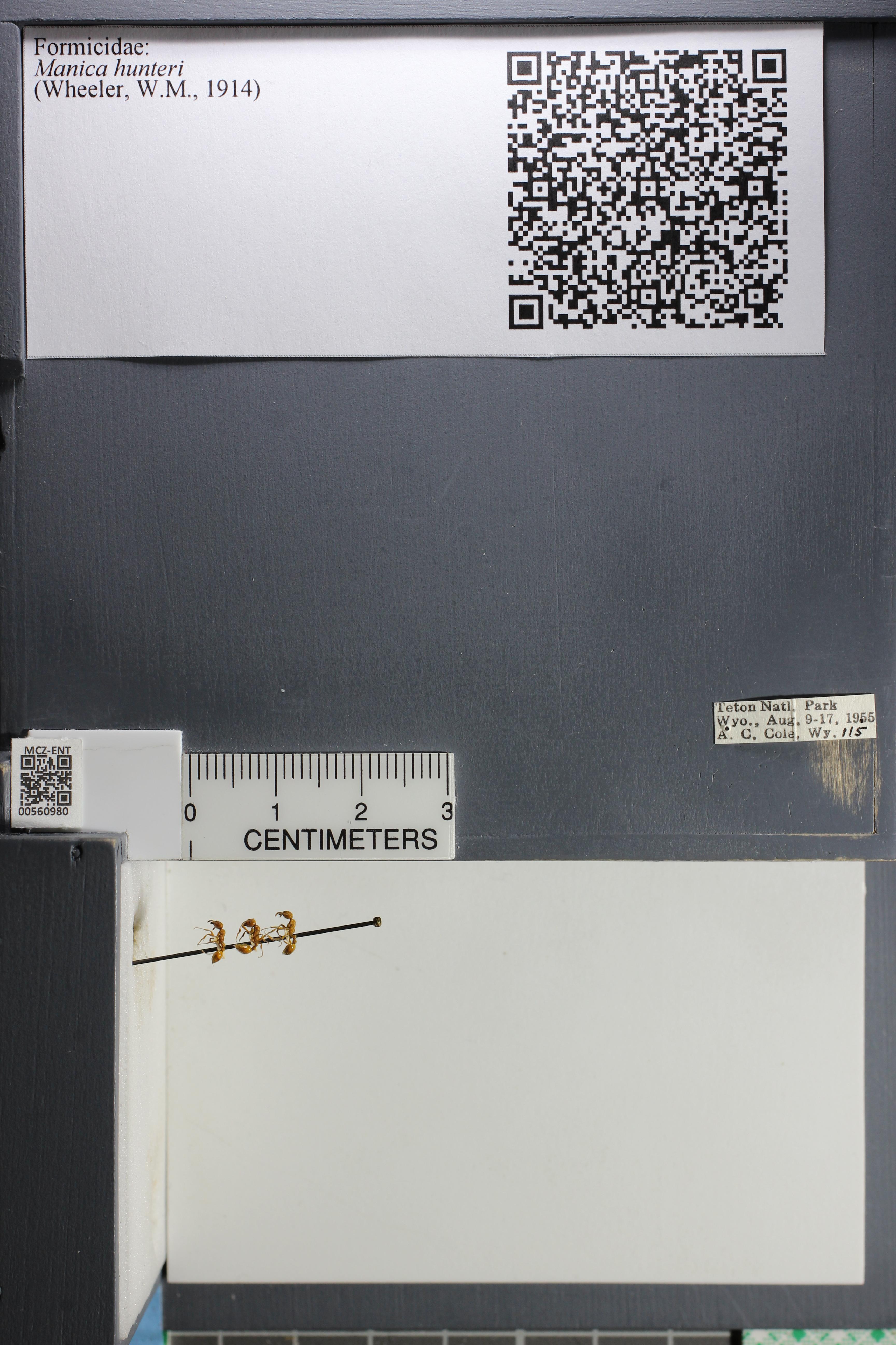http://mczbase.mcz.harvard.edu/specimen_images/ent-formicidae/datashot/2015_05_20/IMG_325840.JPG