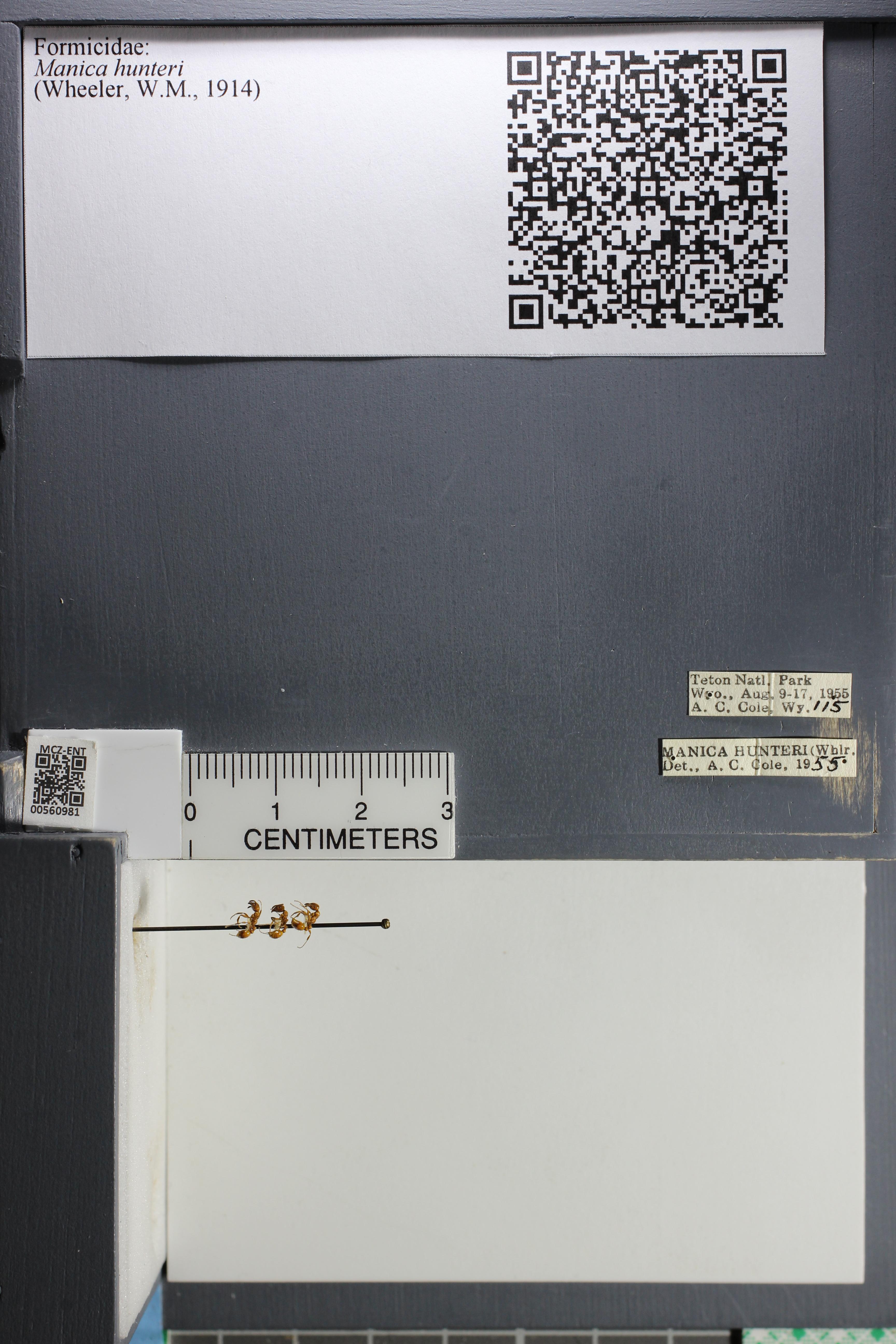 http://mczbase.mcz.harvard.edu/specimen_images/ent-formicidae/datashot/2015_05_20/IMG_325841.JPG