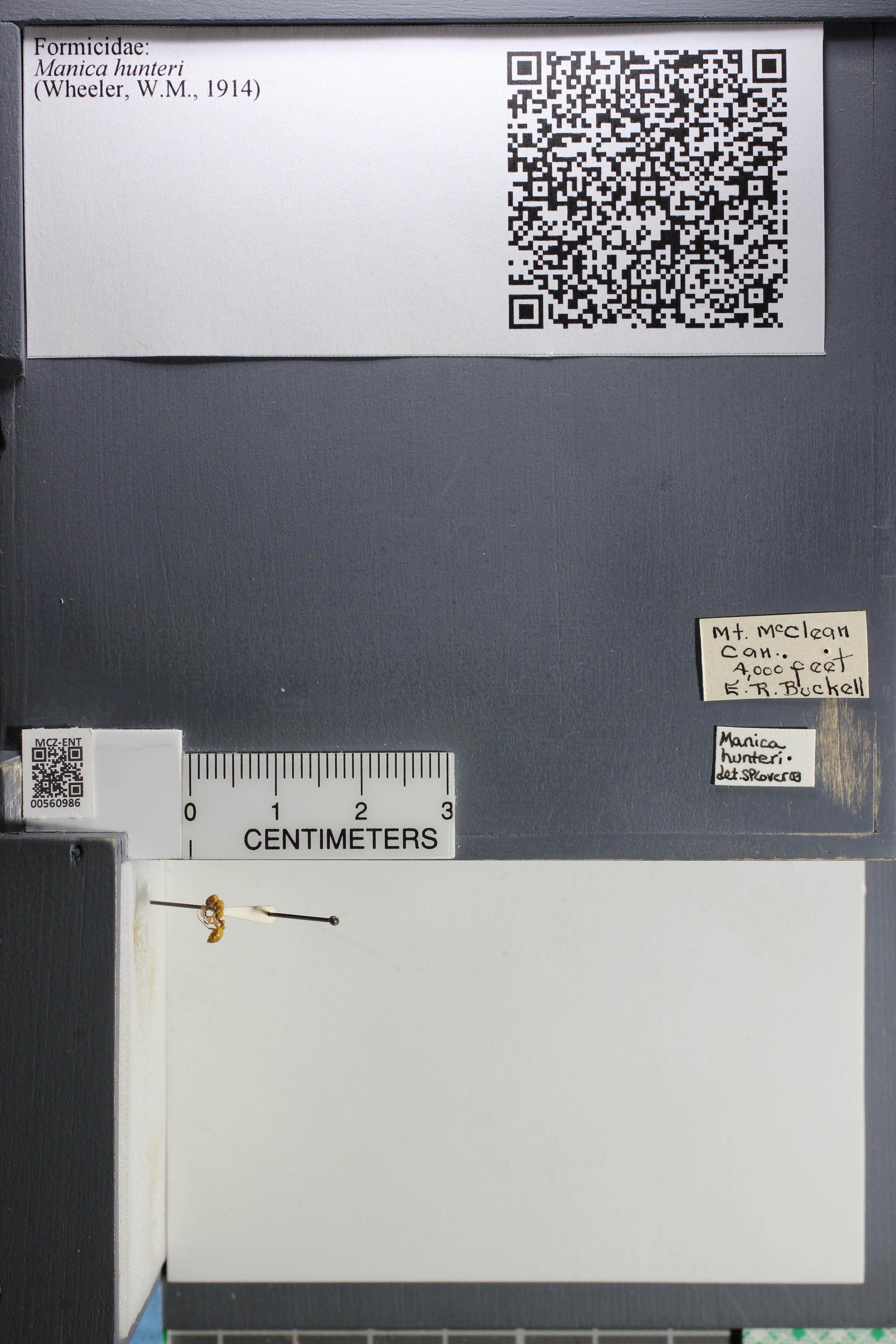 http://mczbase.mcz.harvard.edu/specimen_images/ent-formicidae/datashot/2015_05_20/IMG_325846.JPG