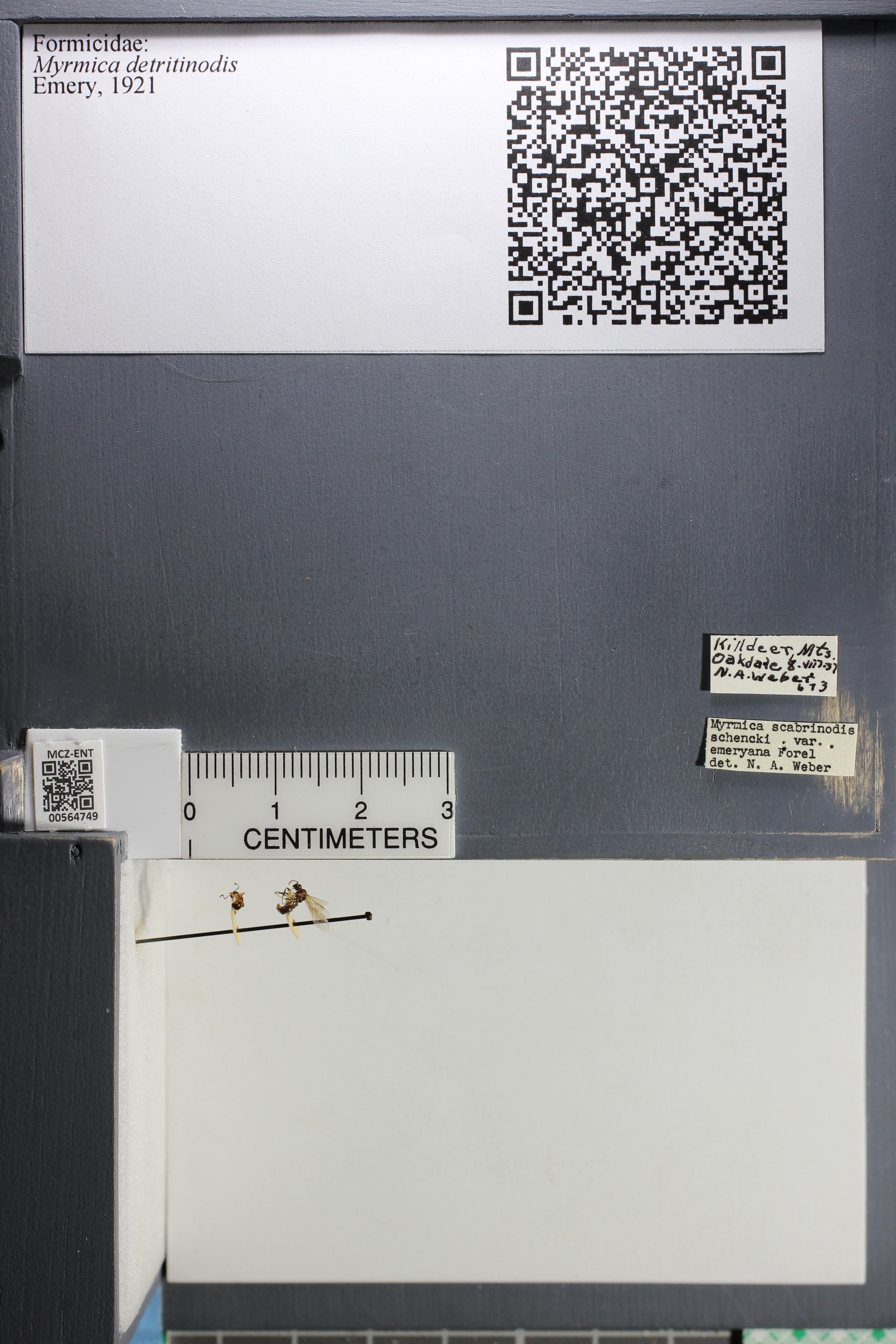 http://mczbase.mcz.harvard.edu/specimen_images/ent-formicidae/datashot/2015_06_22/IMG_328069.JPG