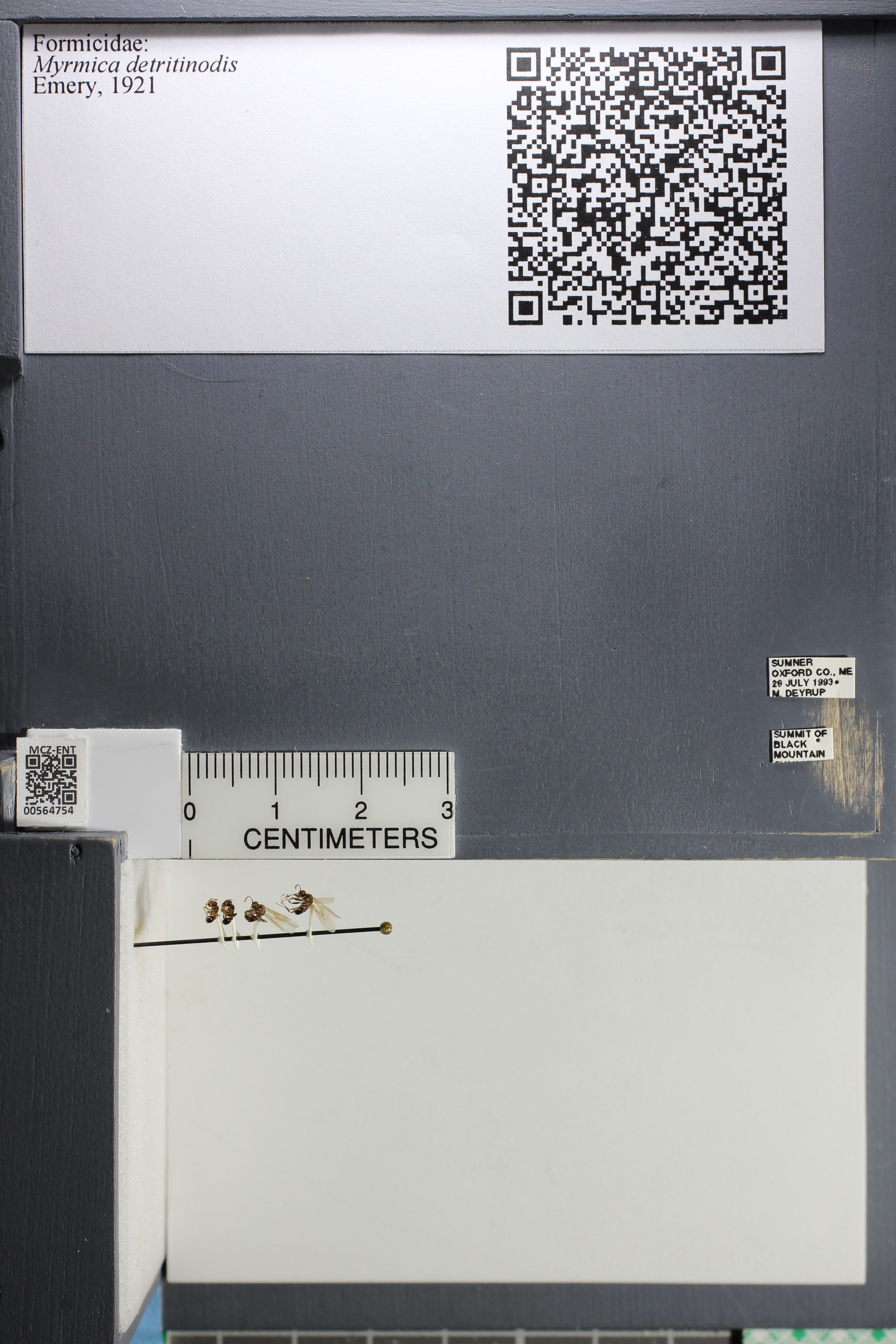 http://mczbase.mcz.harvard.edu/specimen_images/ent-formicidae/datashot/2015_06_22/IMG_328074.JPG