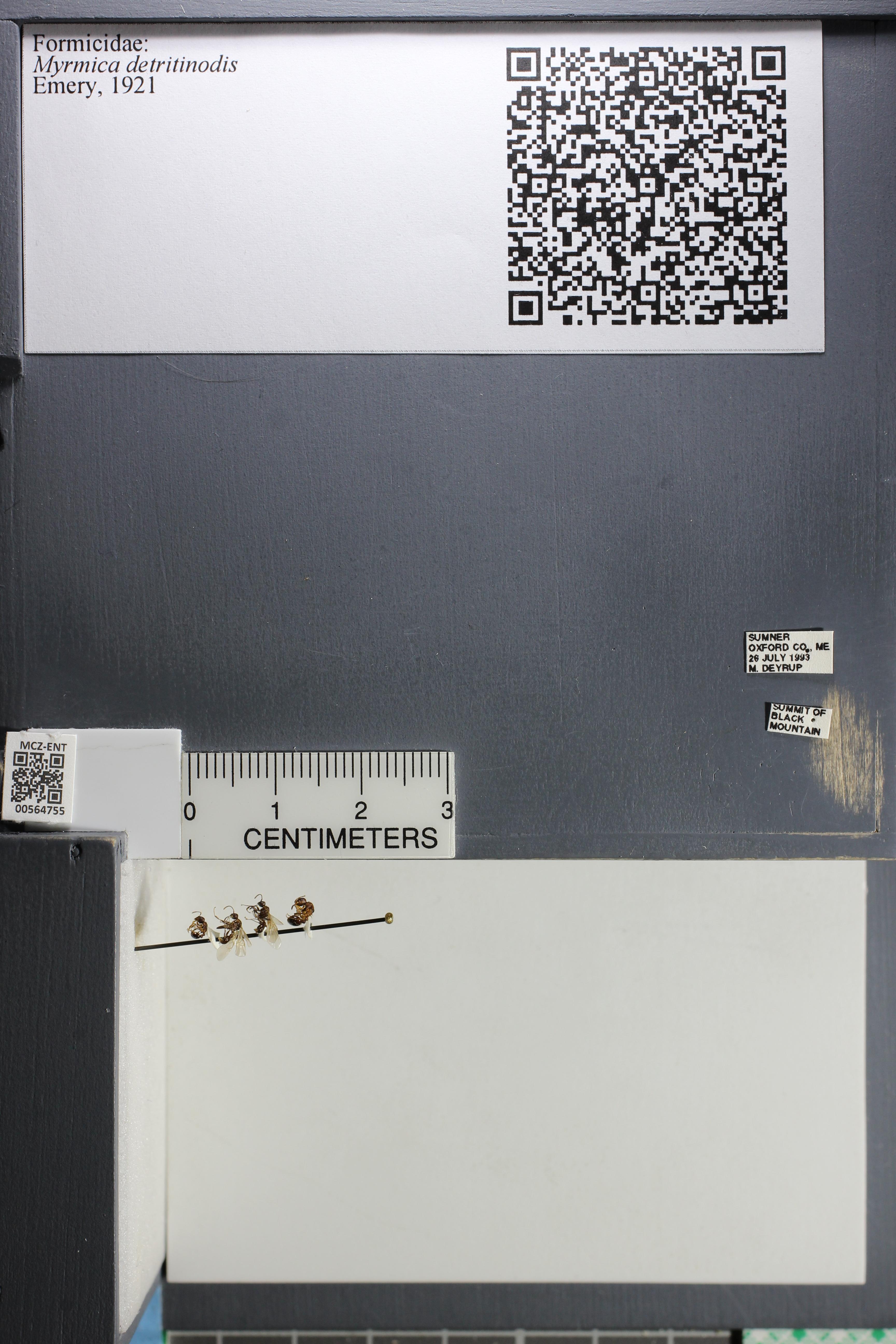 http://mczbase.mcz.harvard.edu/specimen_images/ent-formicidae/datashot/2015_06_22/IMG_328075.JPG