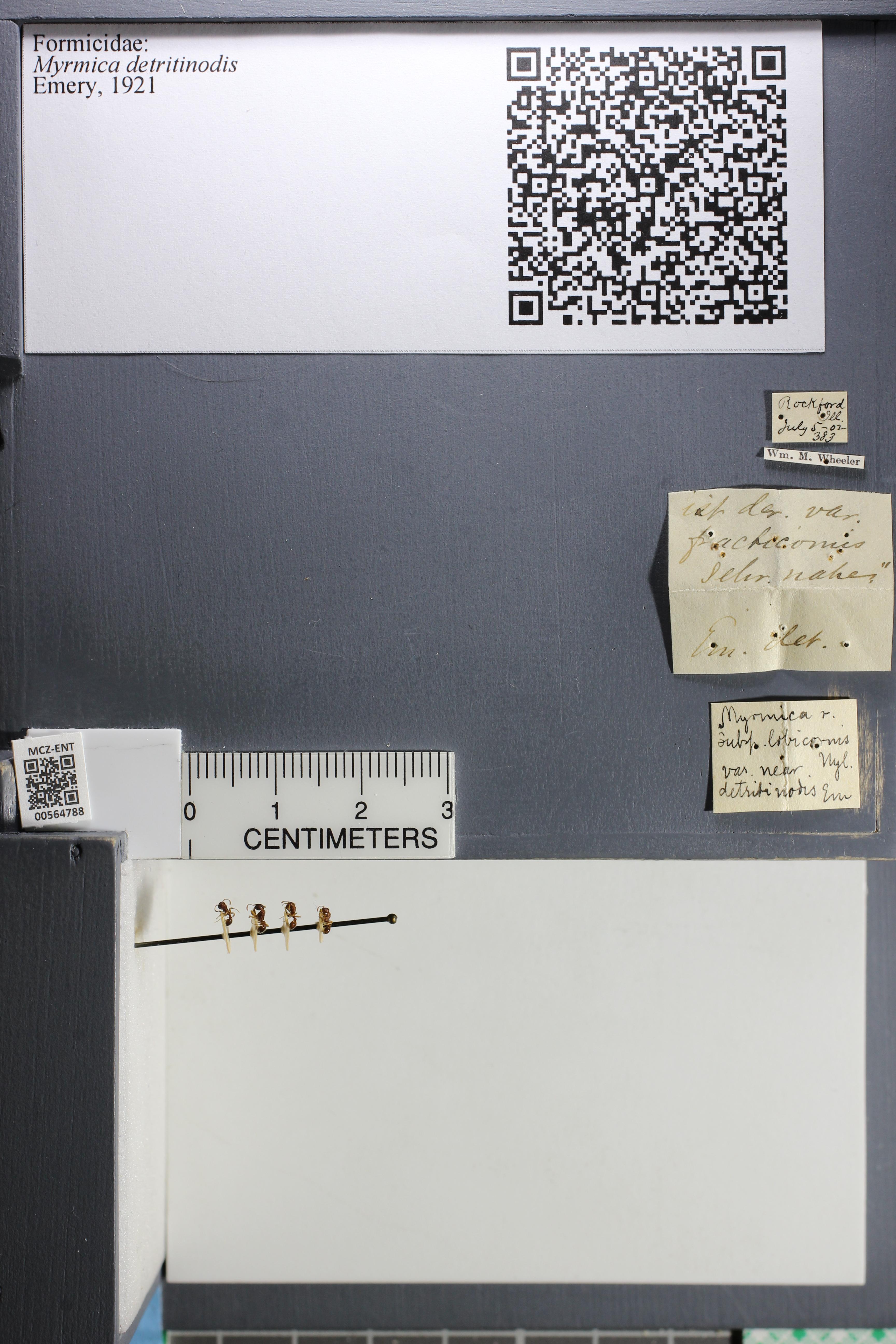 http://mczbase.mcz.harvard.edu/specimen_images/ent-formicidae/datashot/2015_06_22/IMG_328110.JPG