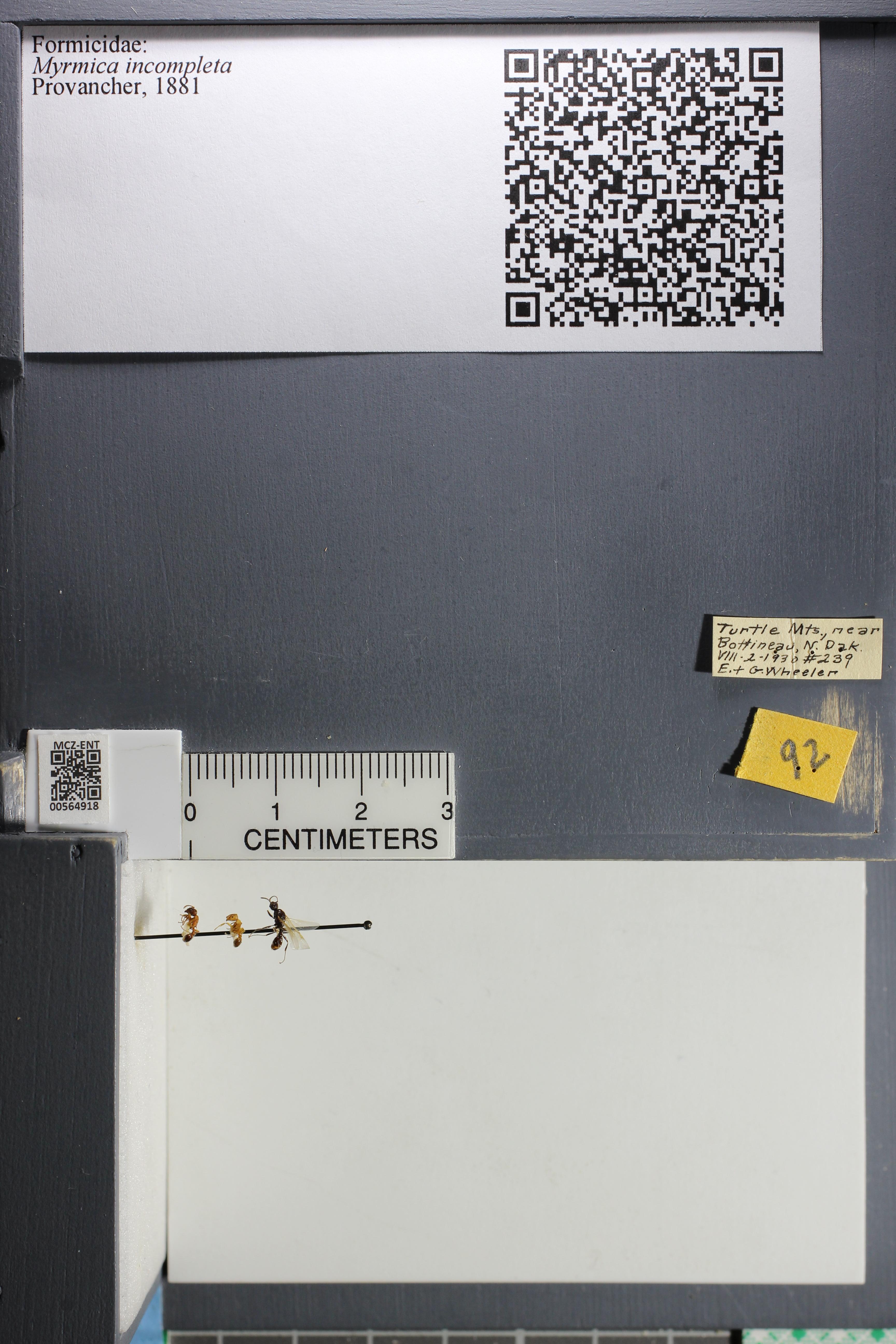 http://mczbase.mcz.harvard.edu/specimen_images/ent-formicidae/datashot/2015_06_24/IMG_328242.JPG