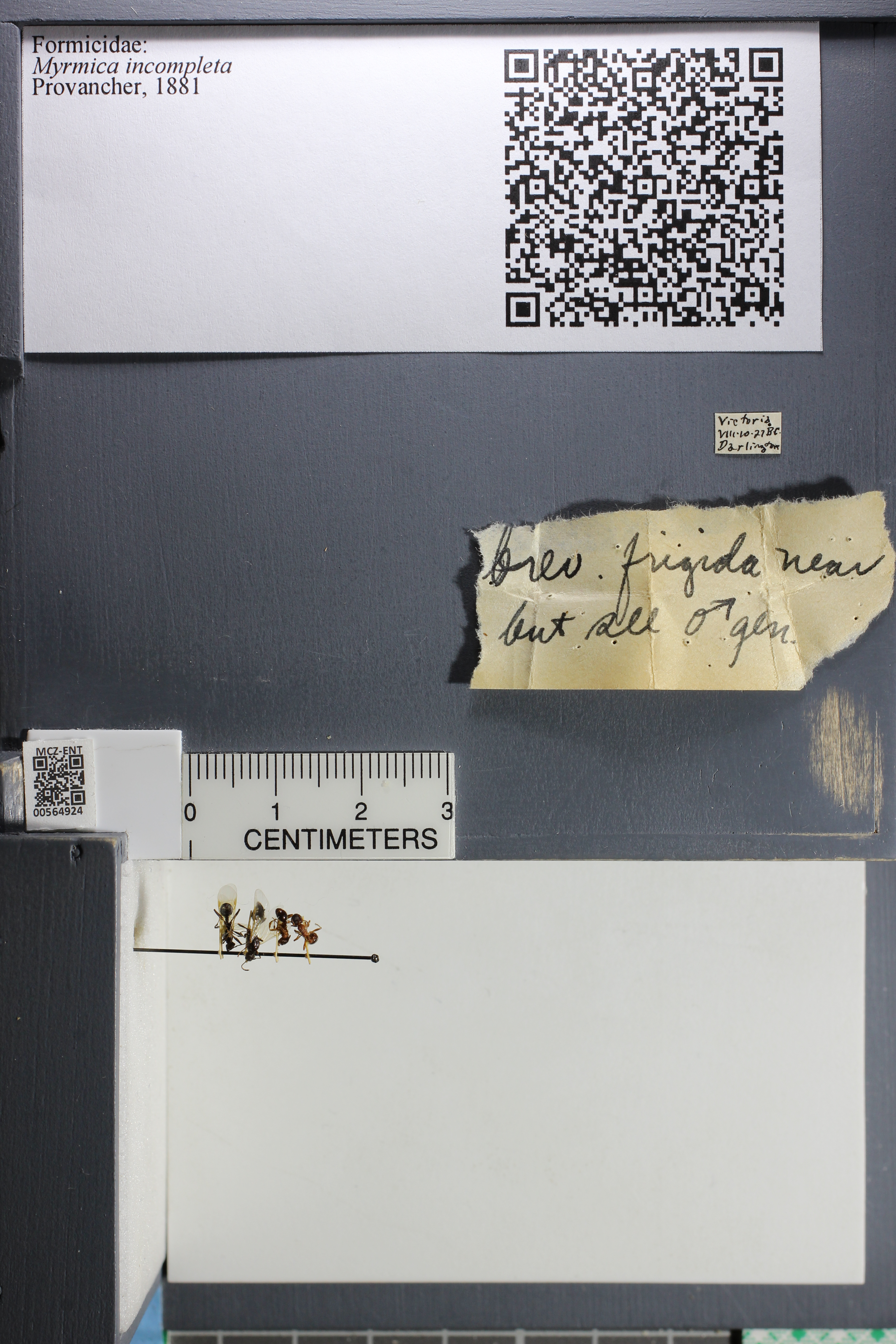 http://mczbase.mcz.harvard.edu/specimen_images/ent-formicidae/datashot/2015_06_24/IMG_328251.JPG