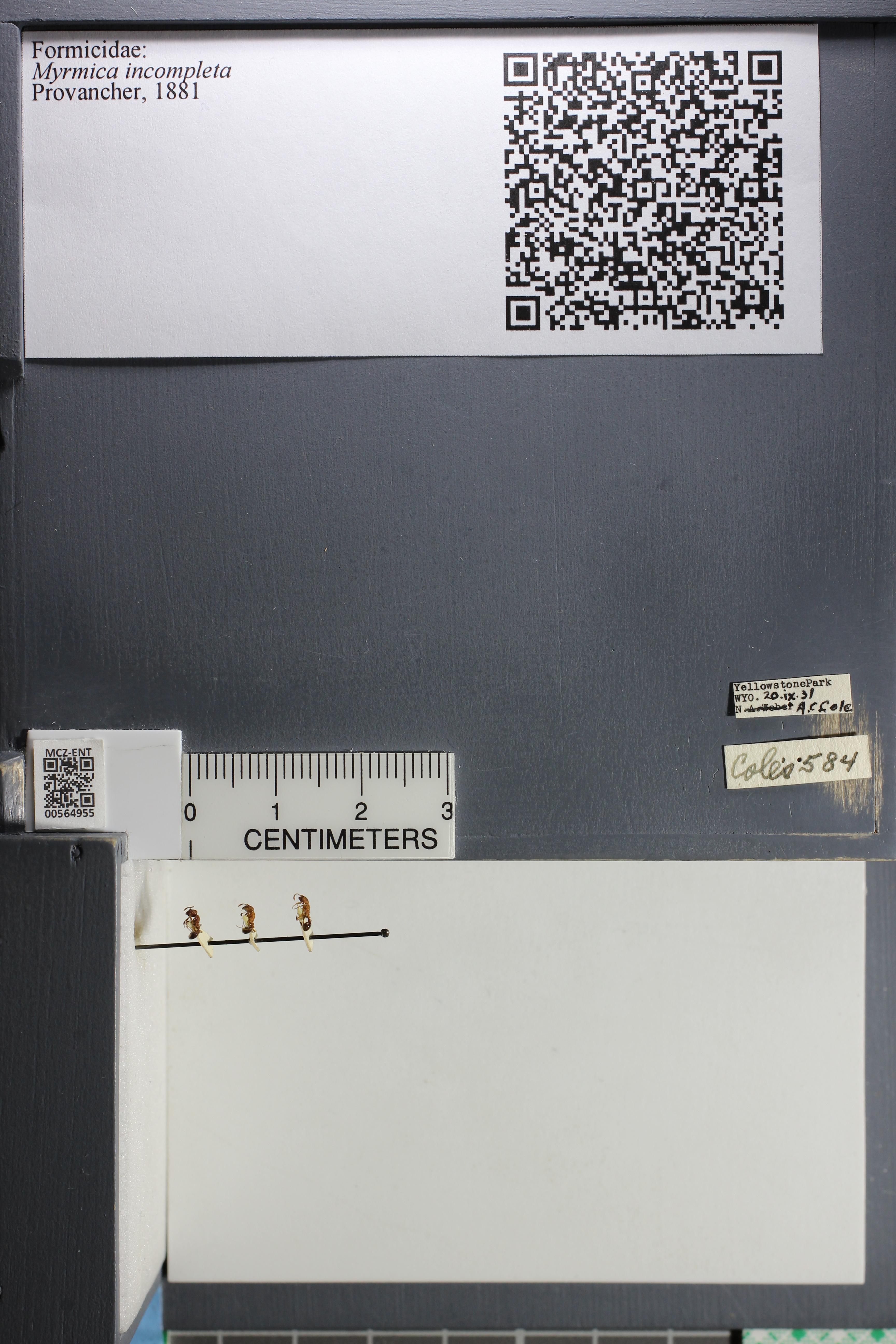 http://mczbase.mcz.harvard.edu/specimen_images/ent-formicidae/datashot/2015_06_24/IMG_328285.JPG