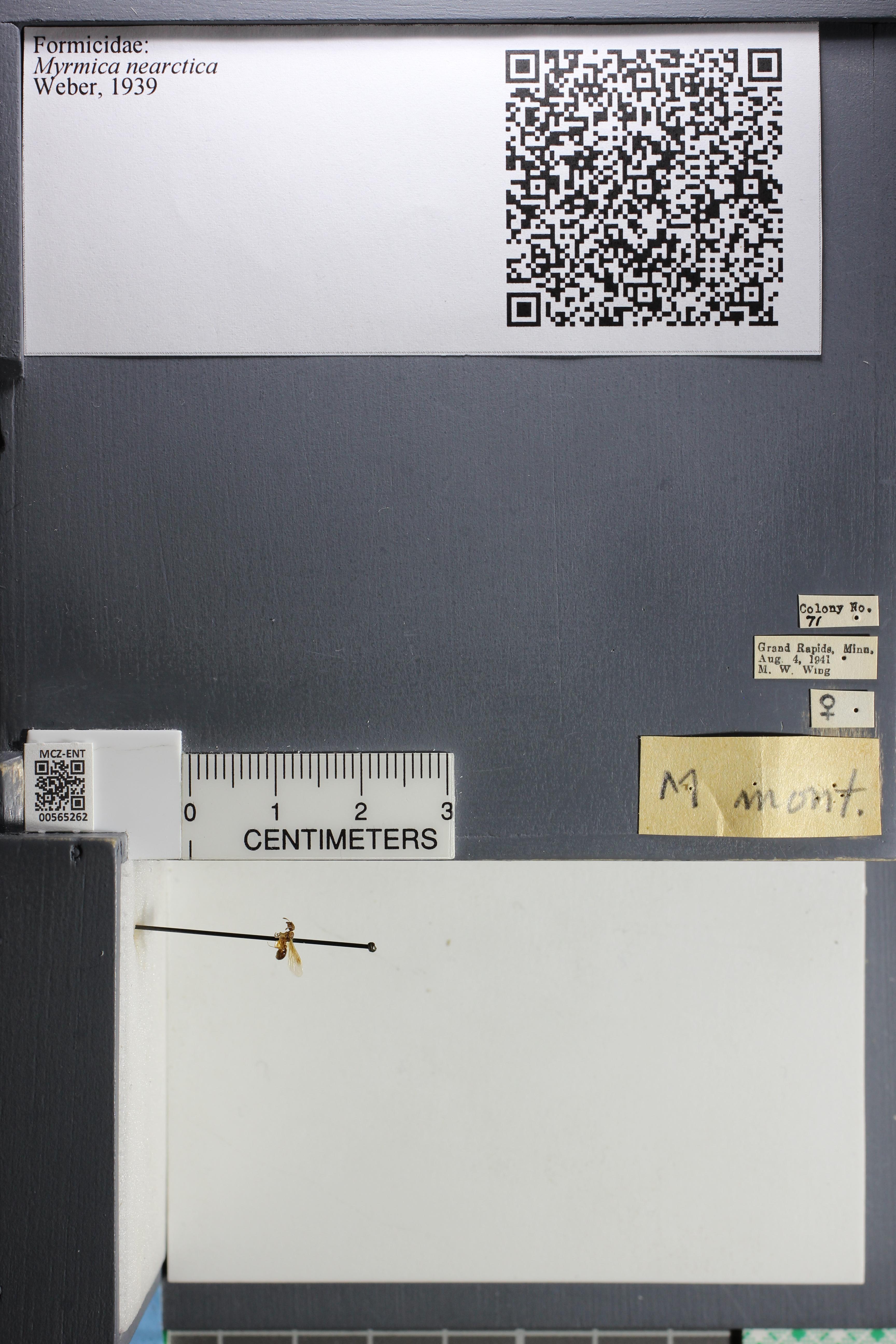 http://mczbase.mcz.harvard.edu/specimen_images/ent-formicidae/datashot/2015_06_25/IMG_328609.JPG