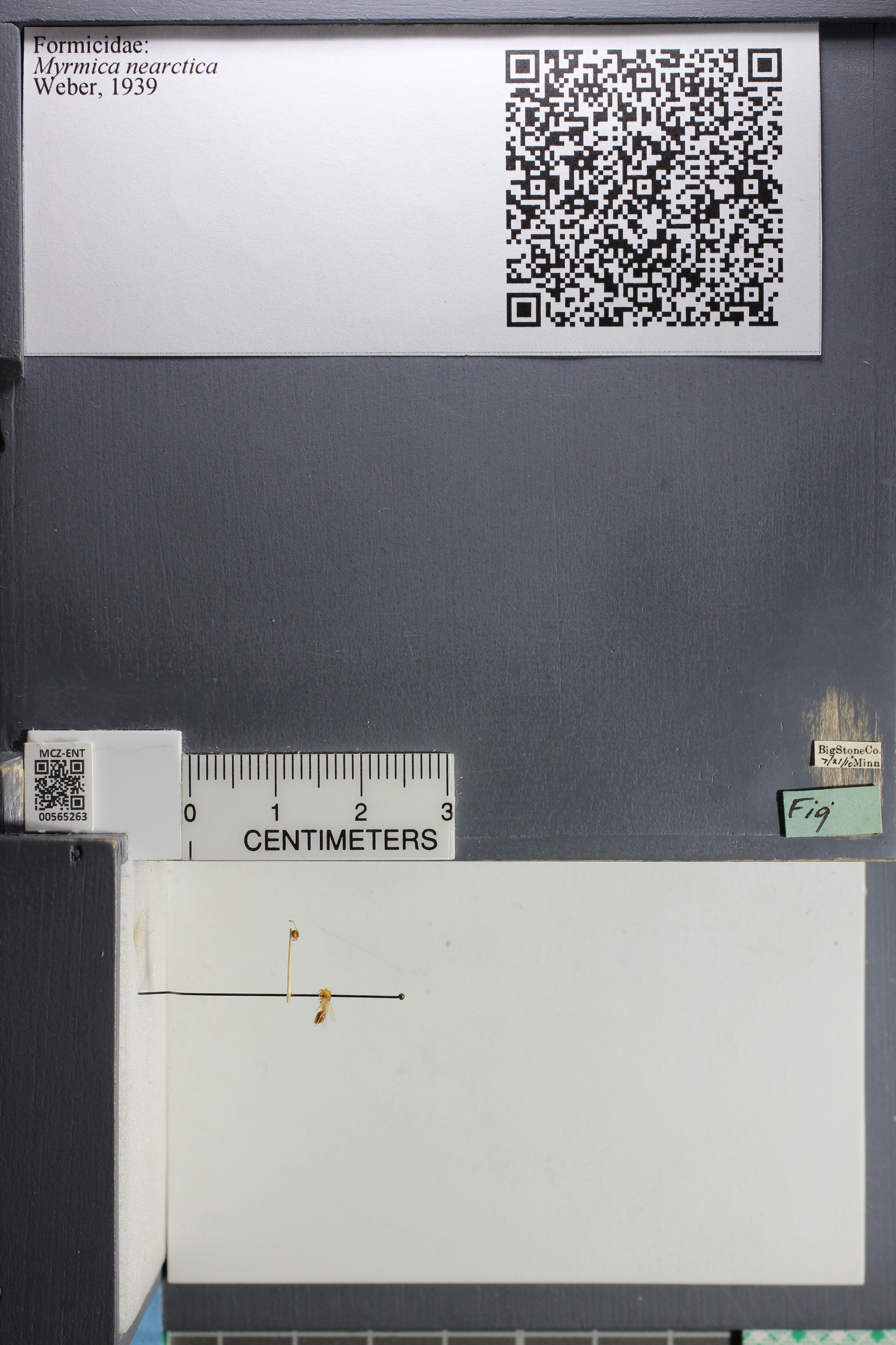 http://mczbase.mcz.harvard.edu/specimen_images/ent-formicidae/datashot/2015_06_25/IMG_328610.JPG