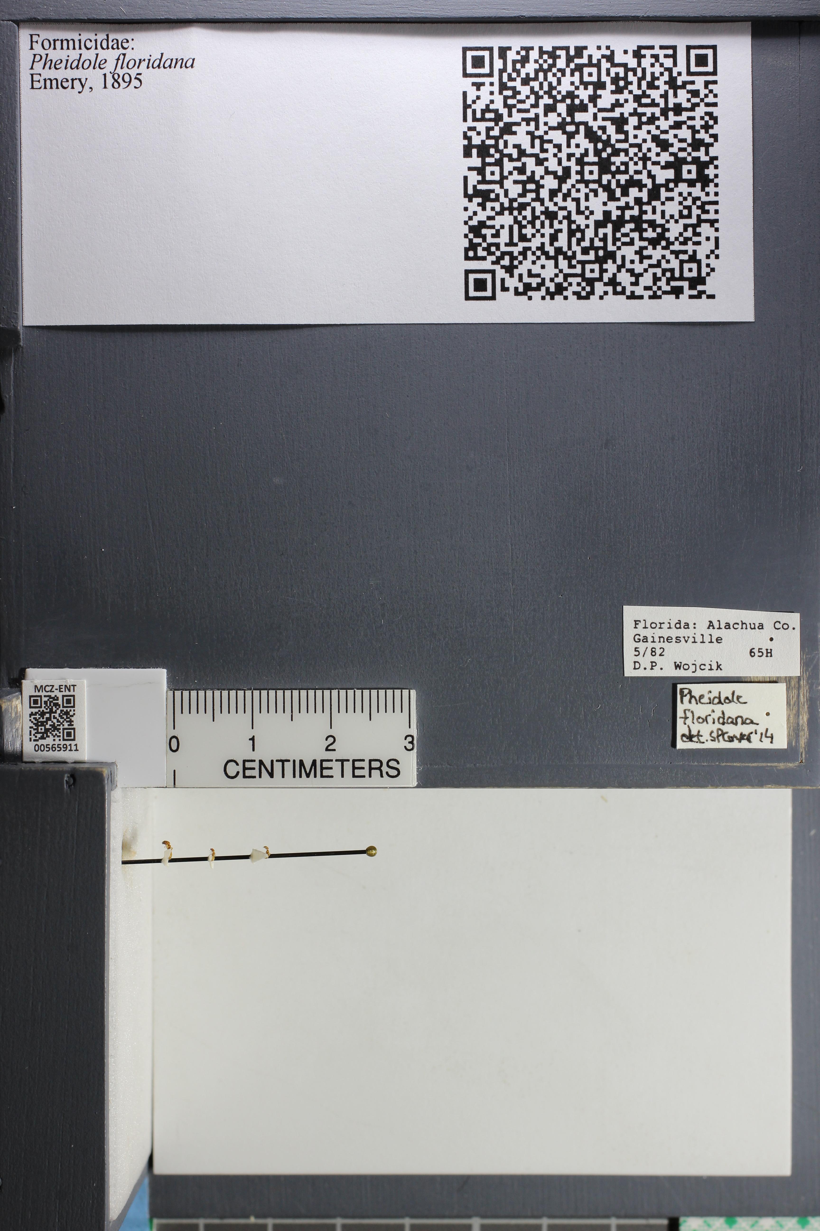 http://mczbase.mcz.harvard.edu/specimen_images/ent-formicidae/datashot/2015_06_30/IMG_329607.JPG