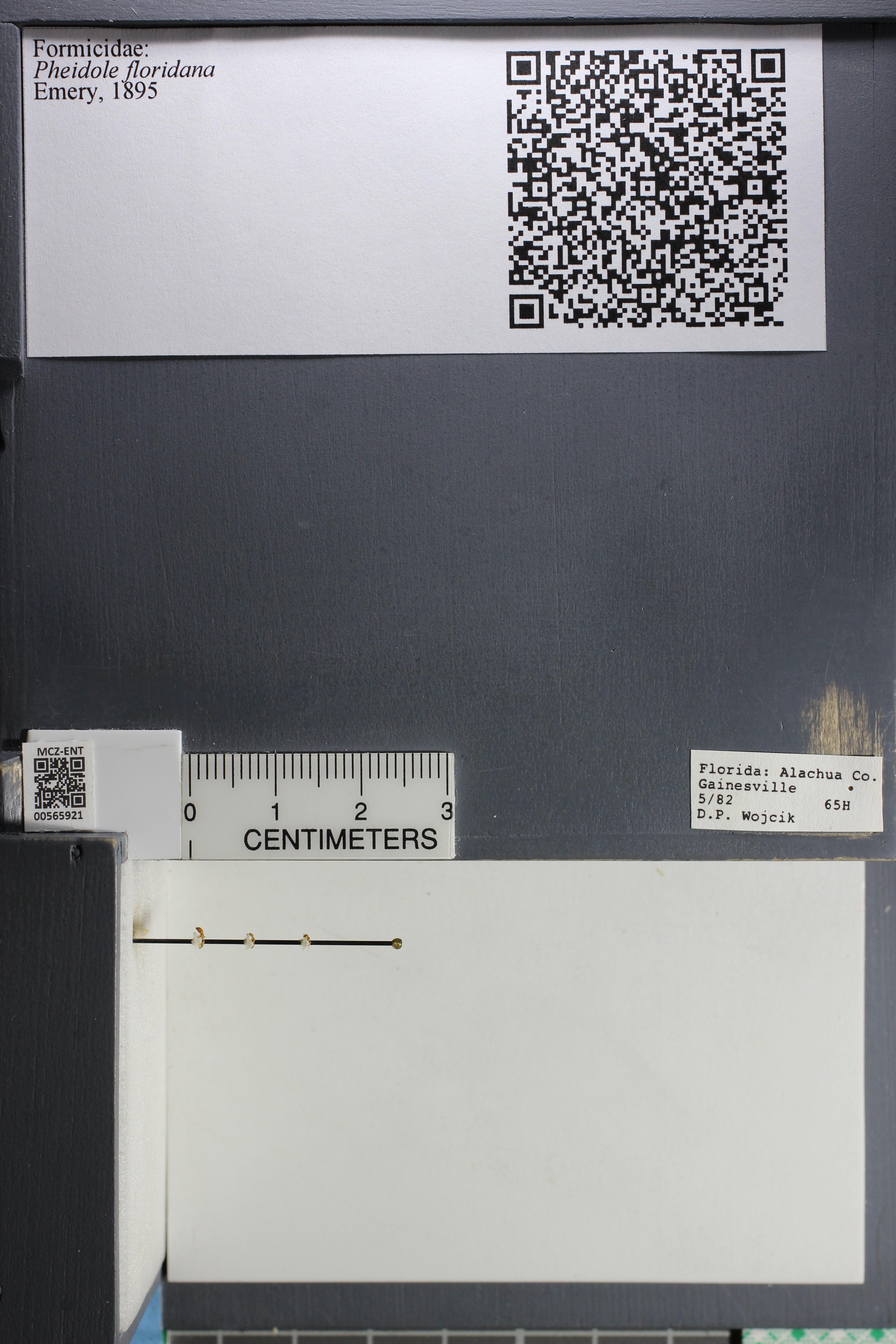 http://mczbase.mcz.harvard.edu/specimen_images/ent-formicidae/datashot/2015_06_30/IMG_329620.JPG