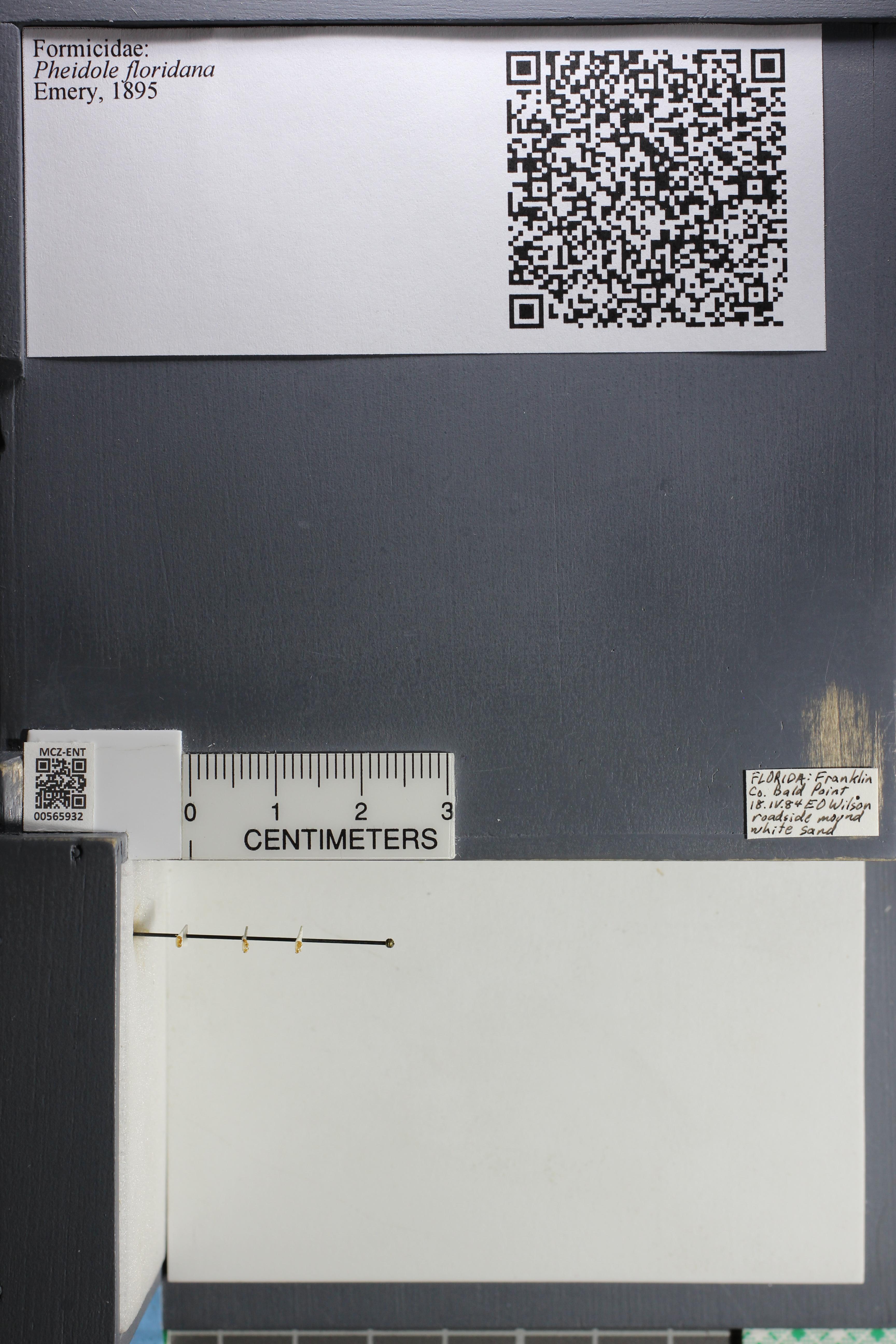 http://mczbase.mcz.harvard.edu/specimen_images/ent-formicidae/datashot/2015_06_30/IMG_329632.JPG