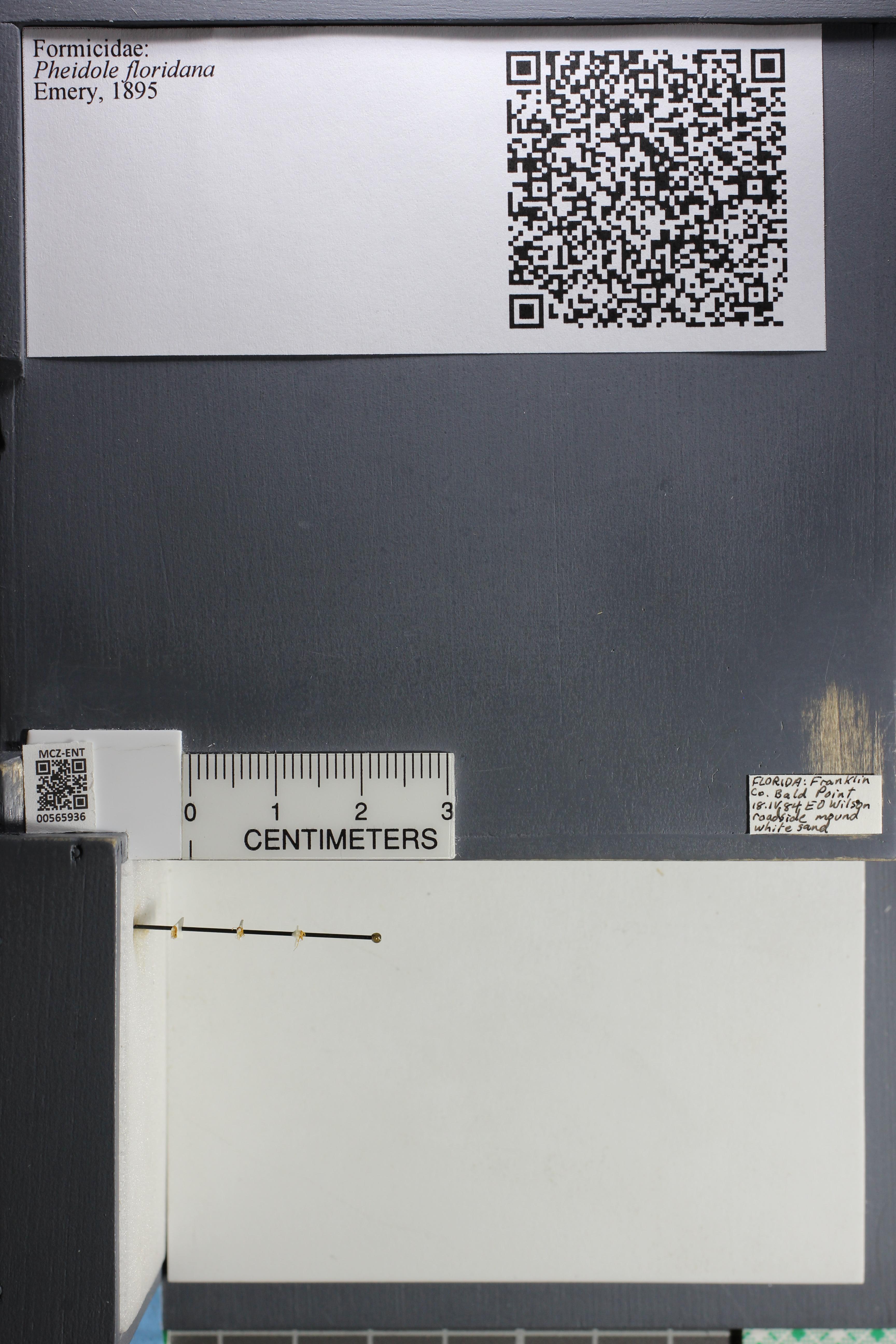http://mczbase.mcz.harvard.edu/specimen_images/ent-formicidae/datashot/2015_06_30/IMG_329636.JPG