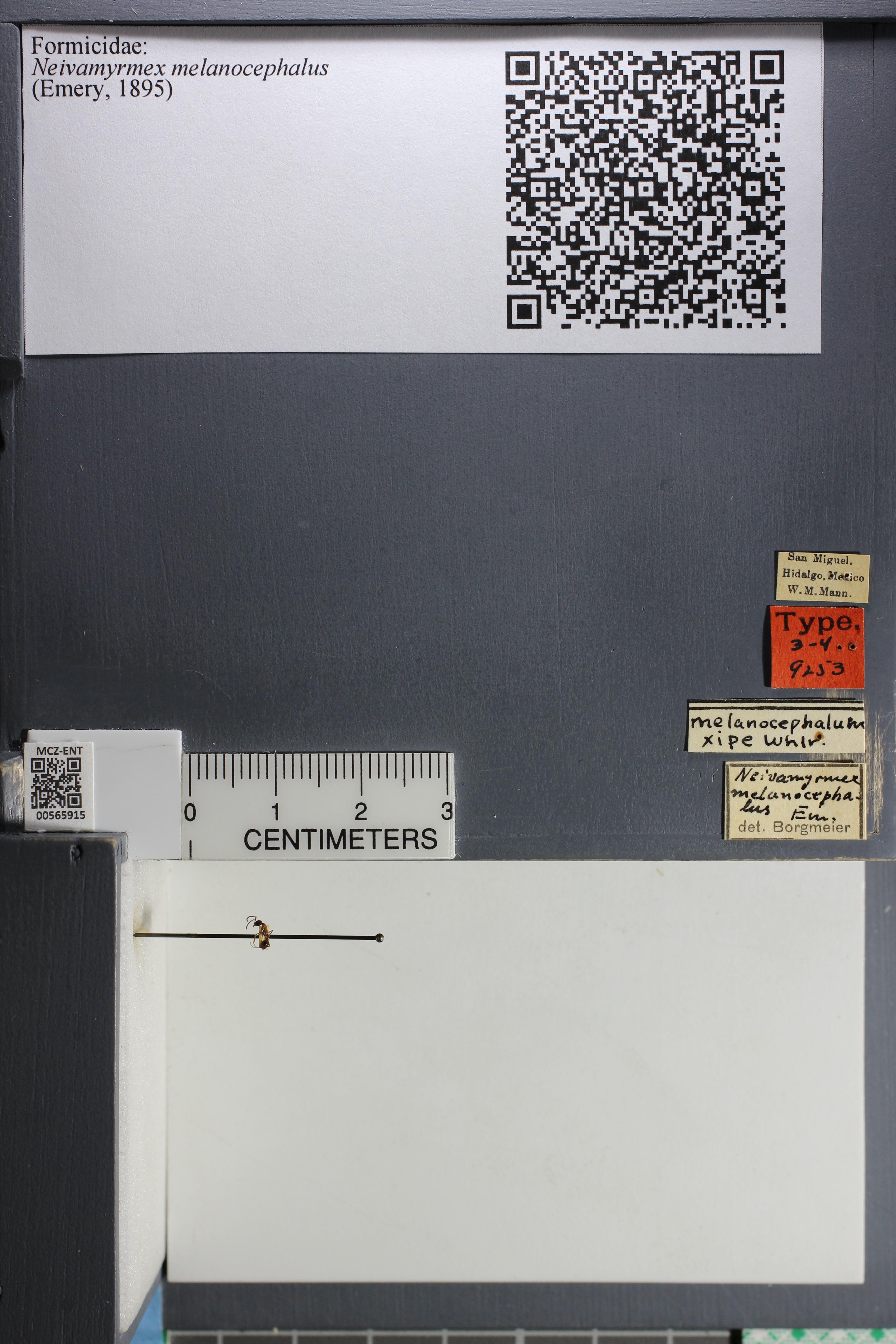 http://mczbase.mcz.harvard.edu/specimen_images/ent-formicidae/datashot/2015_06_30_TYPES/IMG_329615.JPG