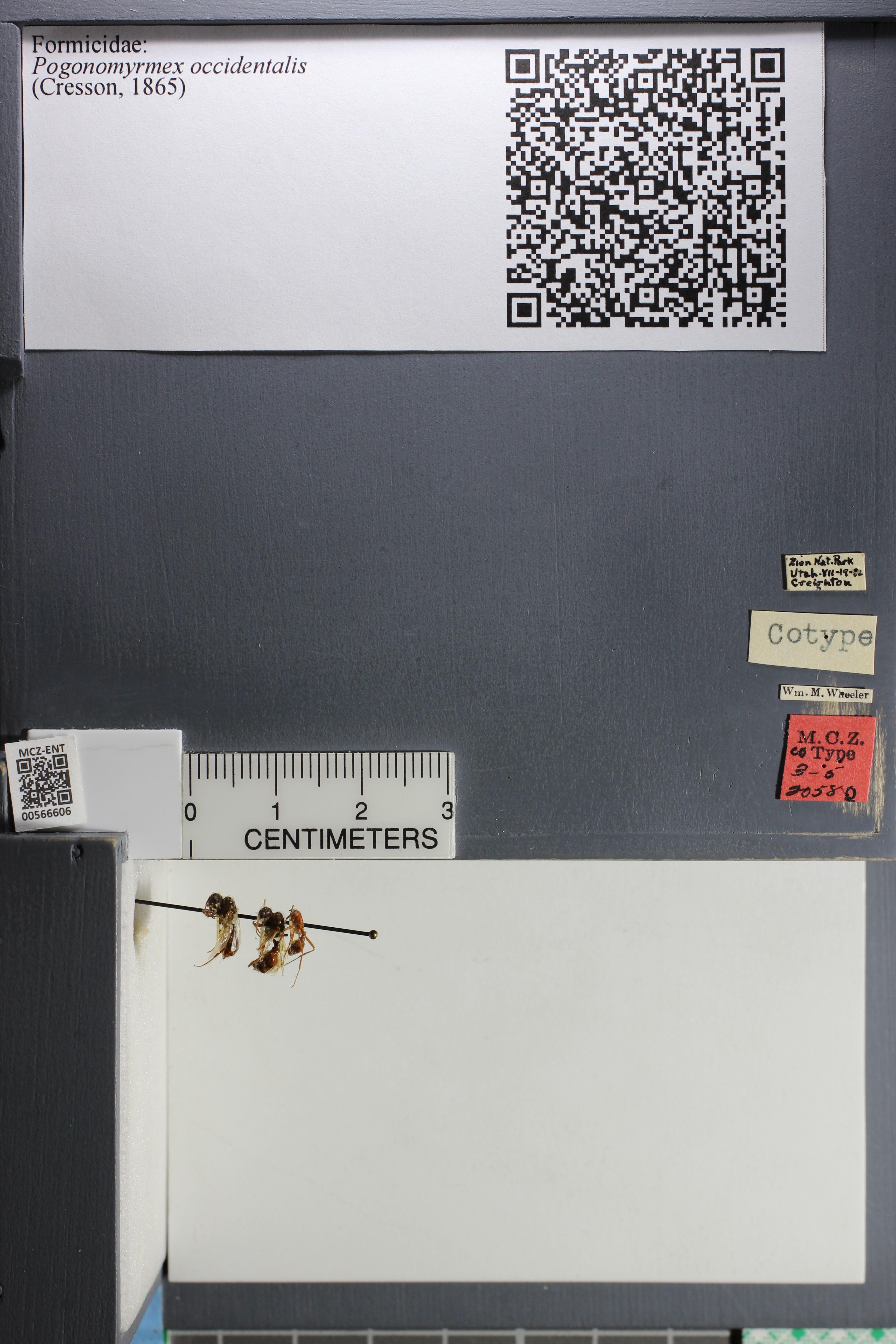 http://mczbase.mcz.harvard.edu/specimen_images/ent-formicidae/datashot/2015_07_08_TYPES/IMG_330651.JPG