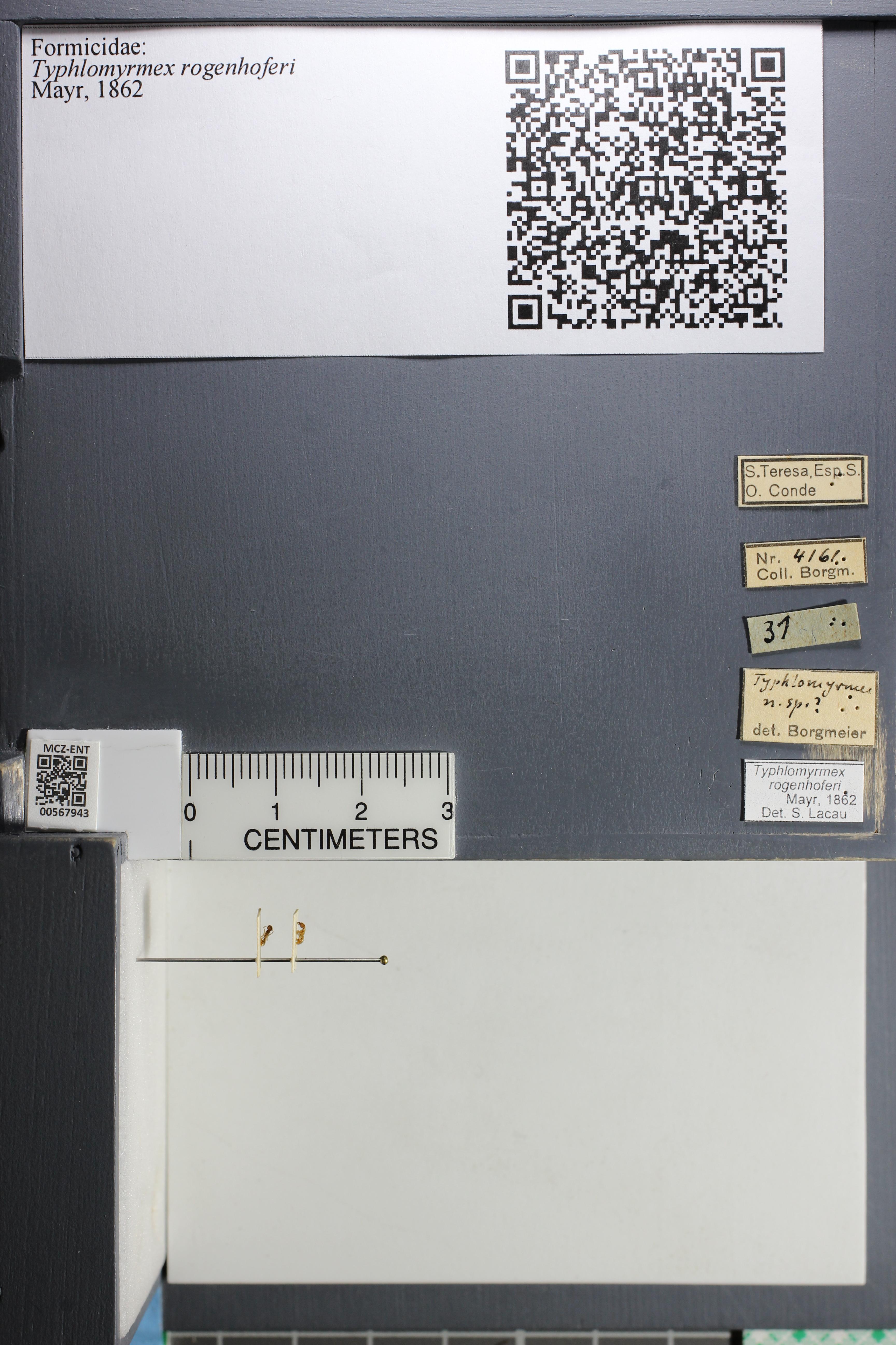 http://mczbase.mcz.harvard.edu/specimen_images/ent-formicidae/datashot/2015_07_14_RTNLOAN/IMG_331539.JPG