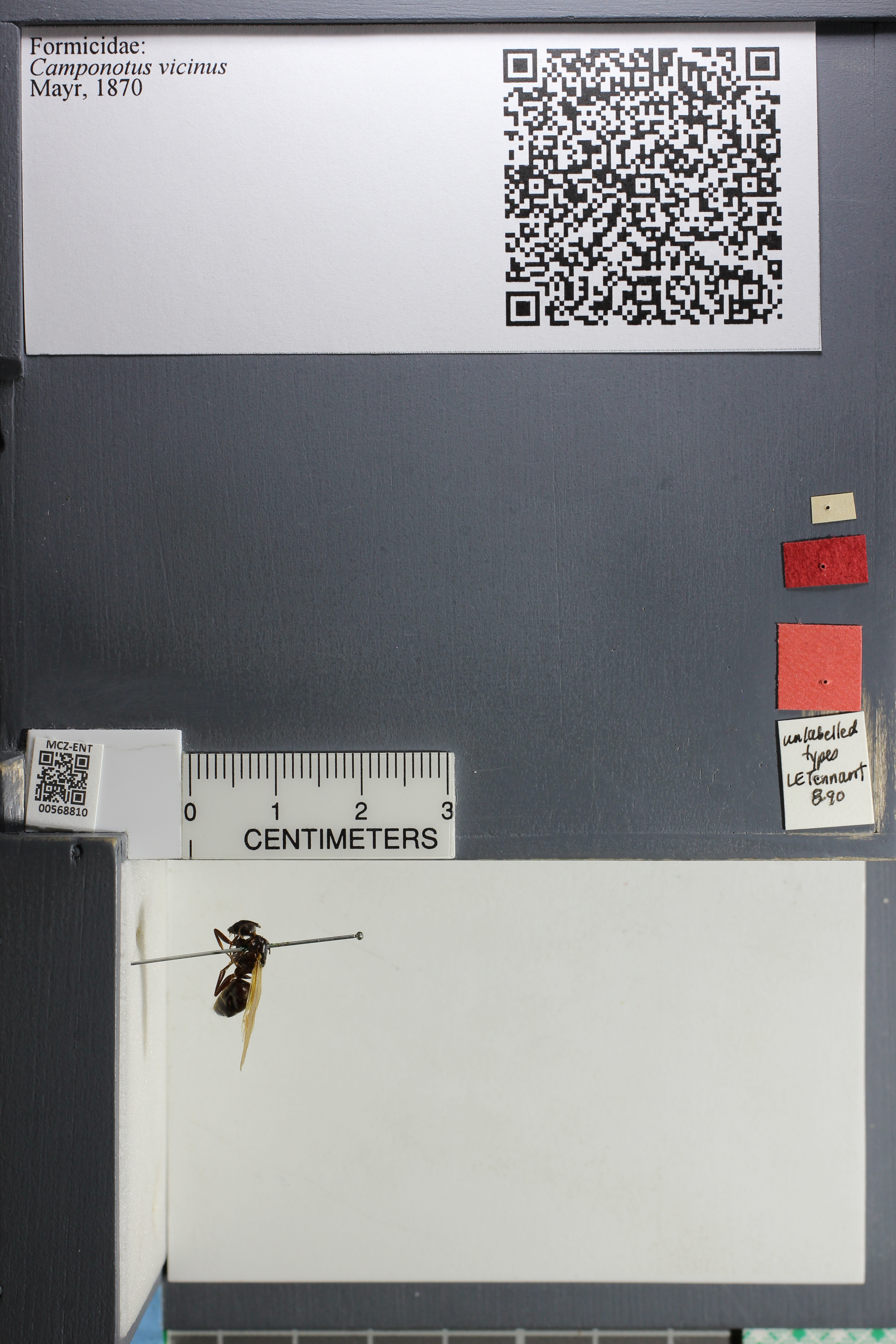 http://mczbase.mcz.harvard.edu/specimen_images/ent-formicidae/datashot/2015_07_21_TYPES/IMG_332587.JPG