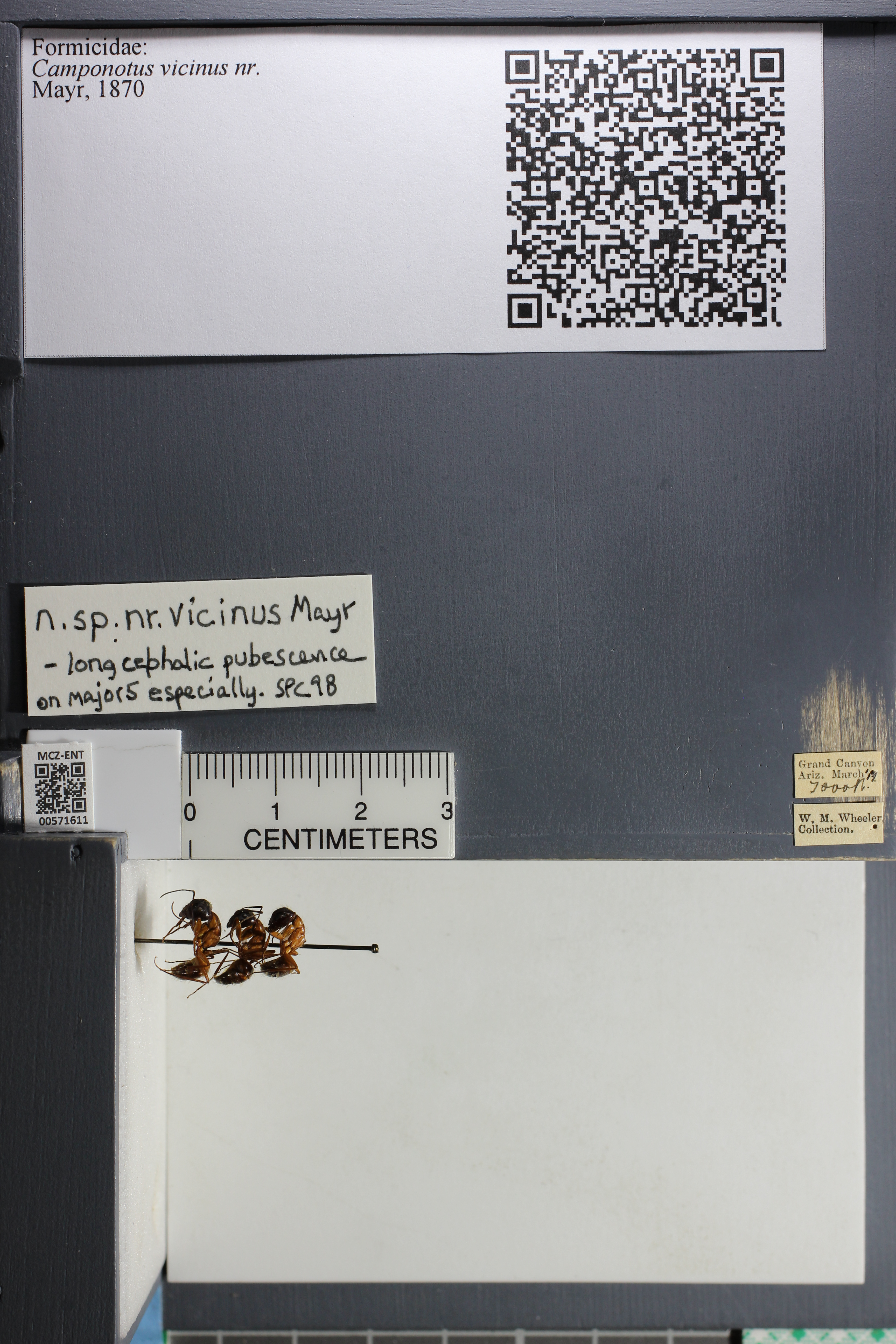 http://mczbase.mcz.harvard.edu/specimen_images/ent-formicidae/datashot/2015_08_04/IMG_334197.JPG