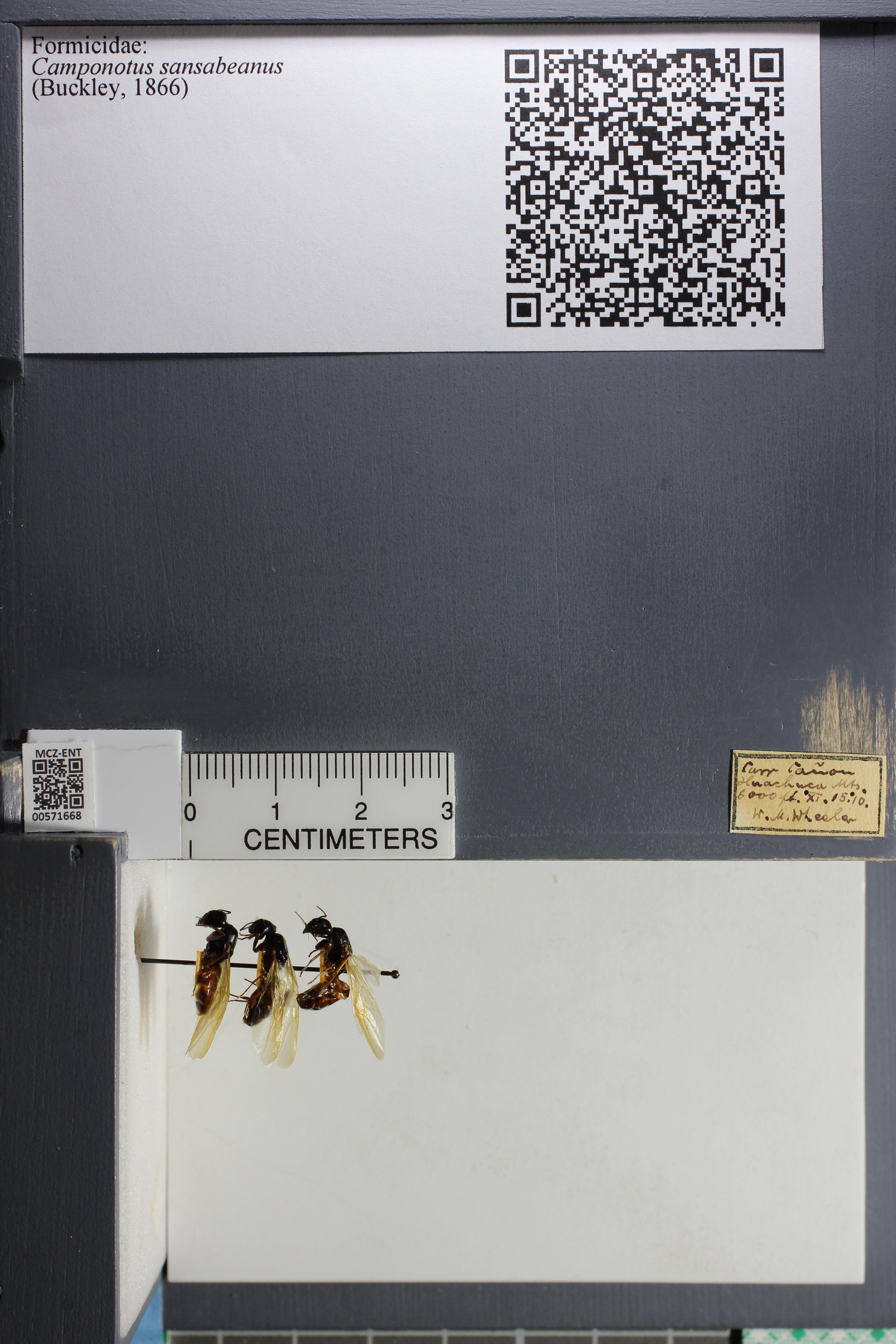 http://mczbase.mcz.harvard.edu/specimen_images/ent-formicidae/datashot/2015_08_04/IMG_334280.JPG