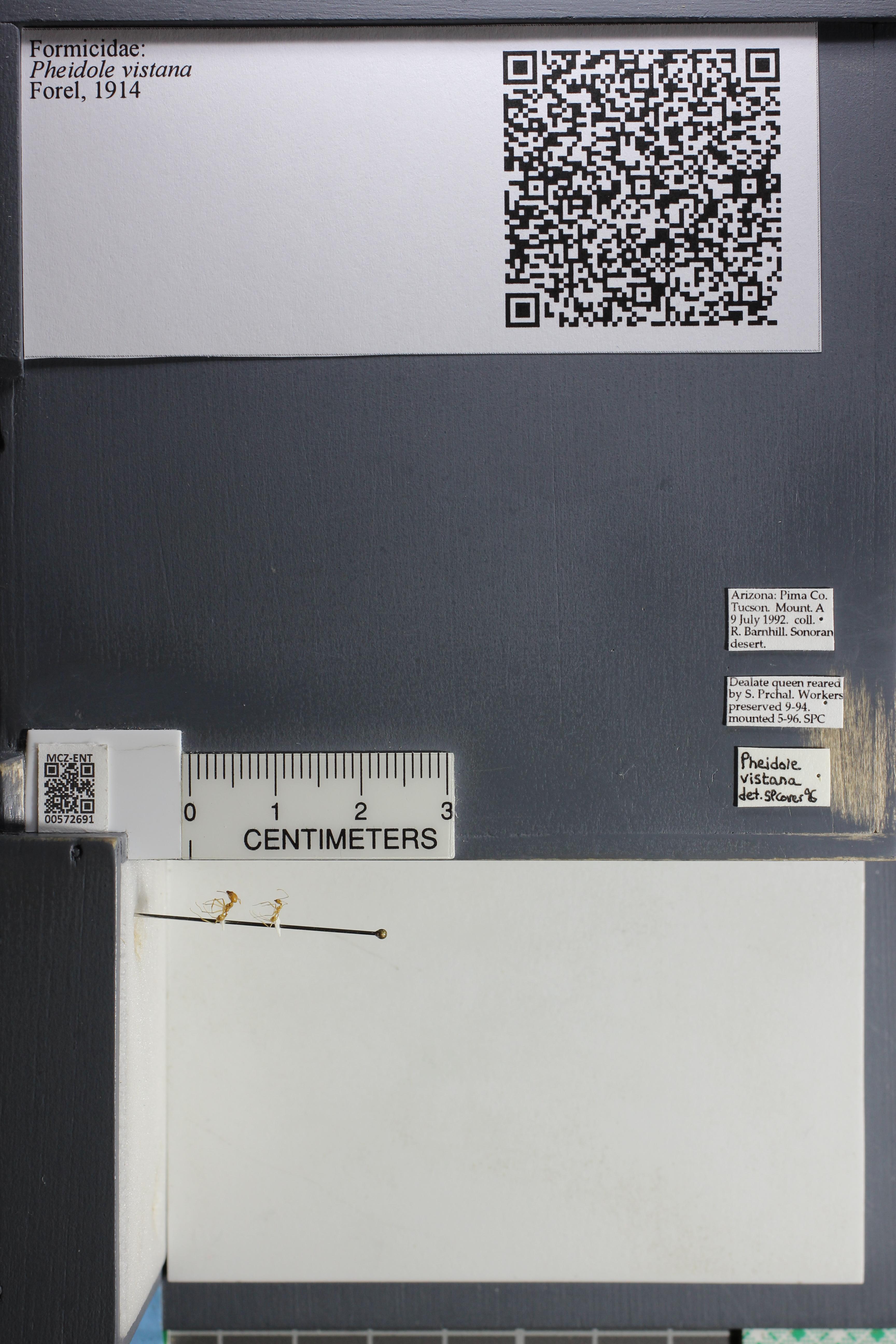 http://mczbase.mcz.harvard.edu/specimen_images/ent-formicidae/datashot/2015_08_11/IMG_334484.JPG