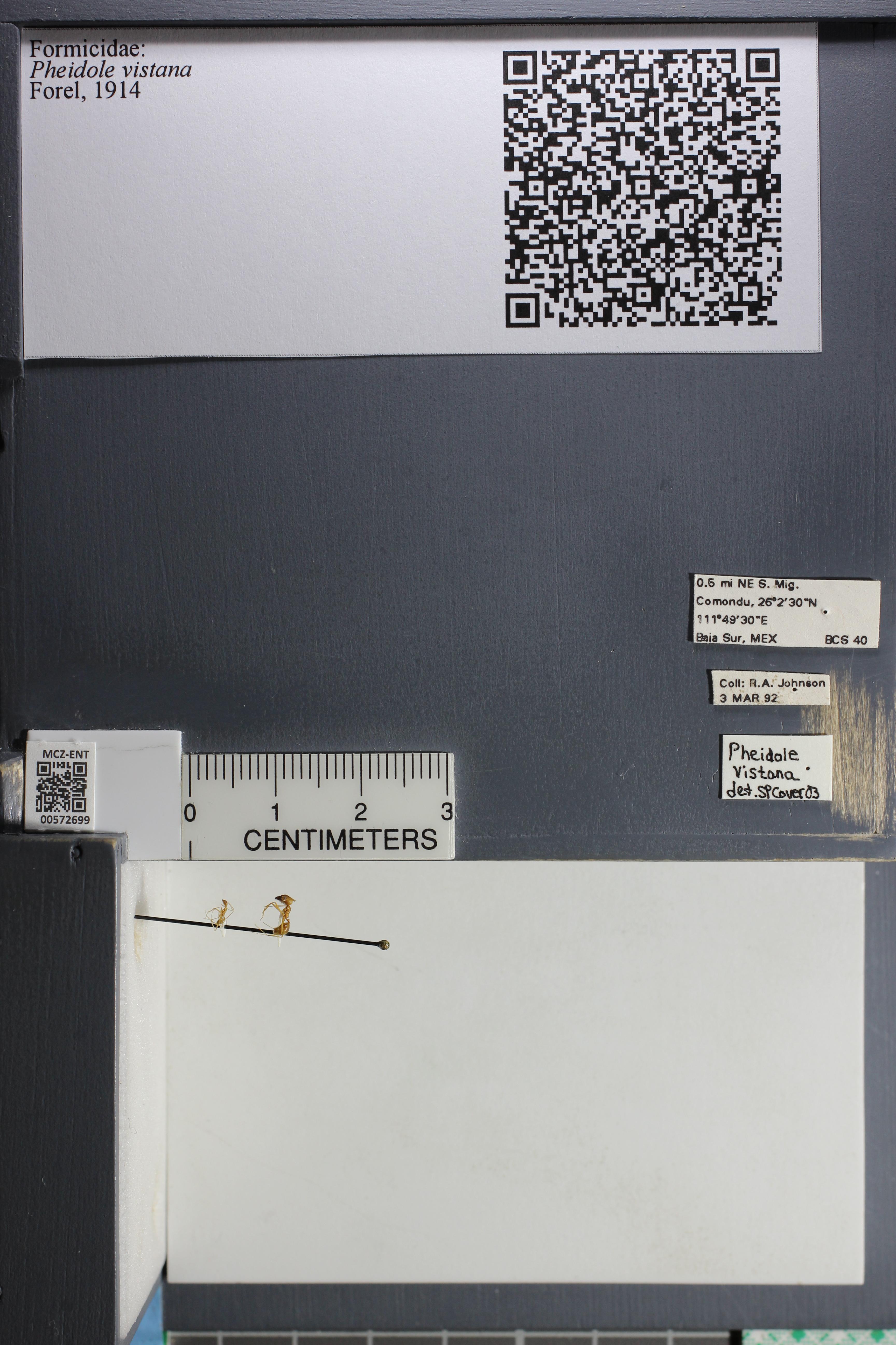 http://mczbase.mcz.harvard.edu/specimen_images/ent-formicidae/datashot/2015_08_11/IMG_334492.JPG