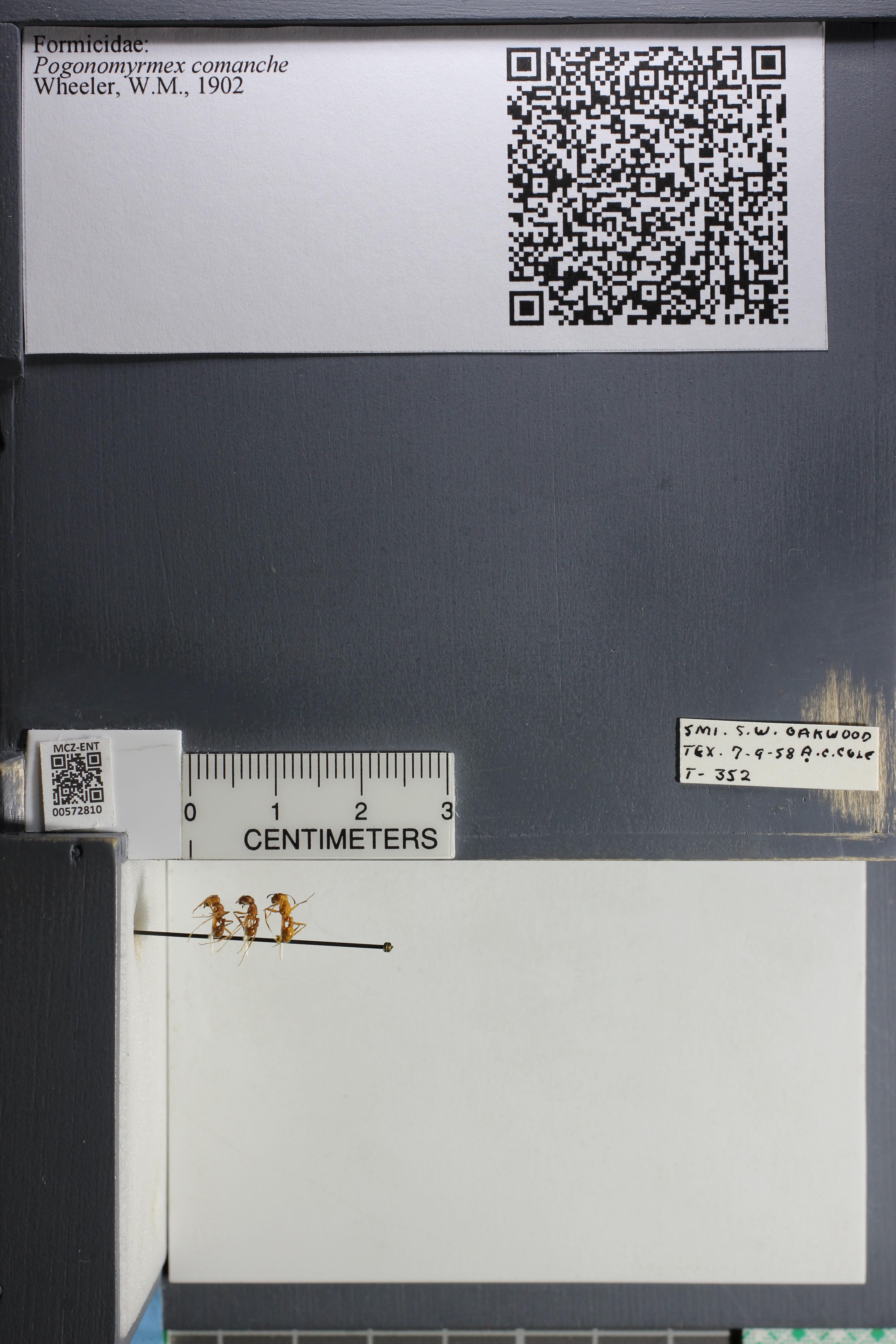 http://mczbase.mcz.harvard.edu/specimen_images/ent-formicidae/datashot/2015_08_11/IMG_334604.JPG