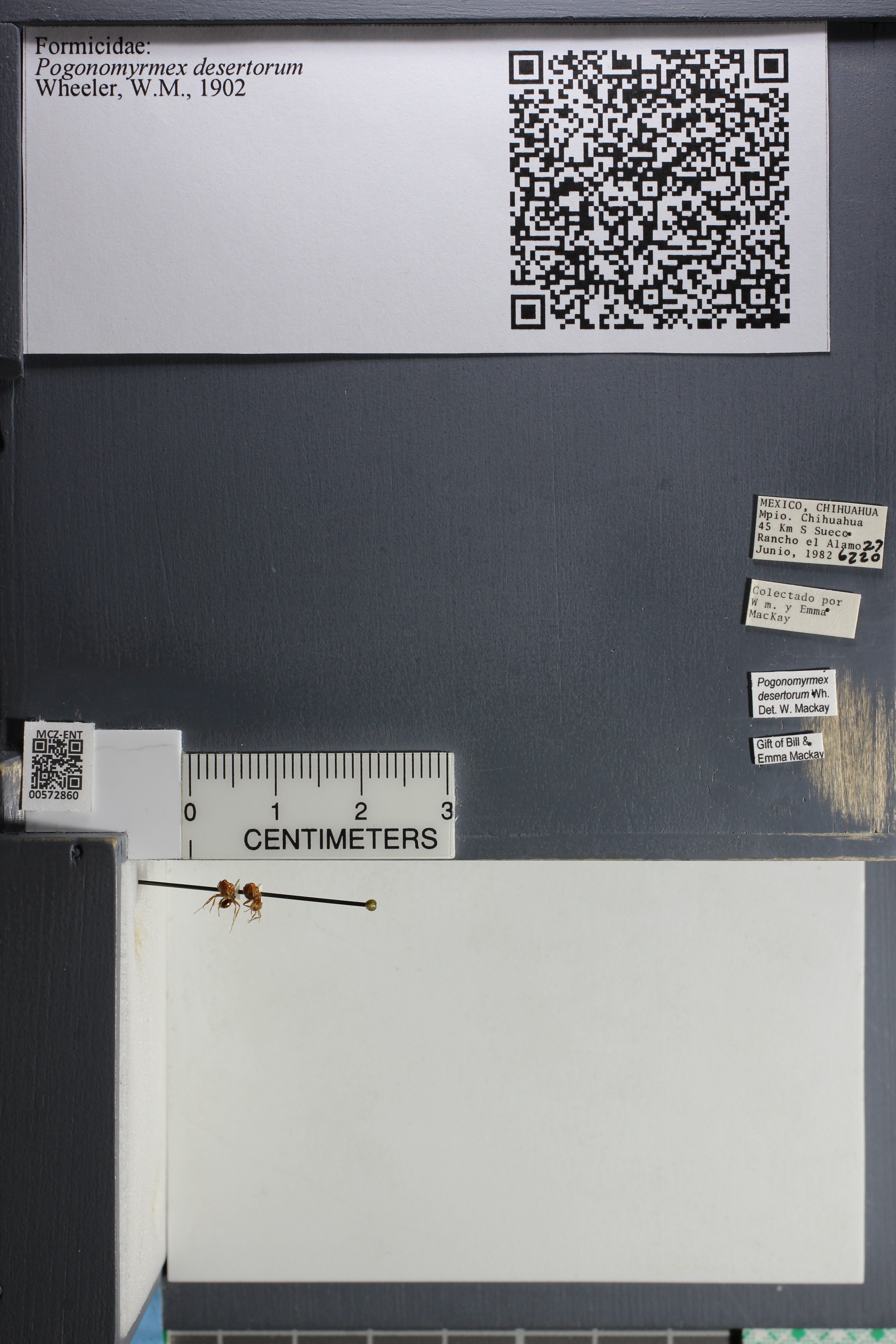 http://mczbase.mcz.harvard.edu/specimen_images/ent-formicidae/datashot/2015_08_12/IMG_334655.JPG