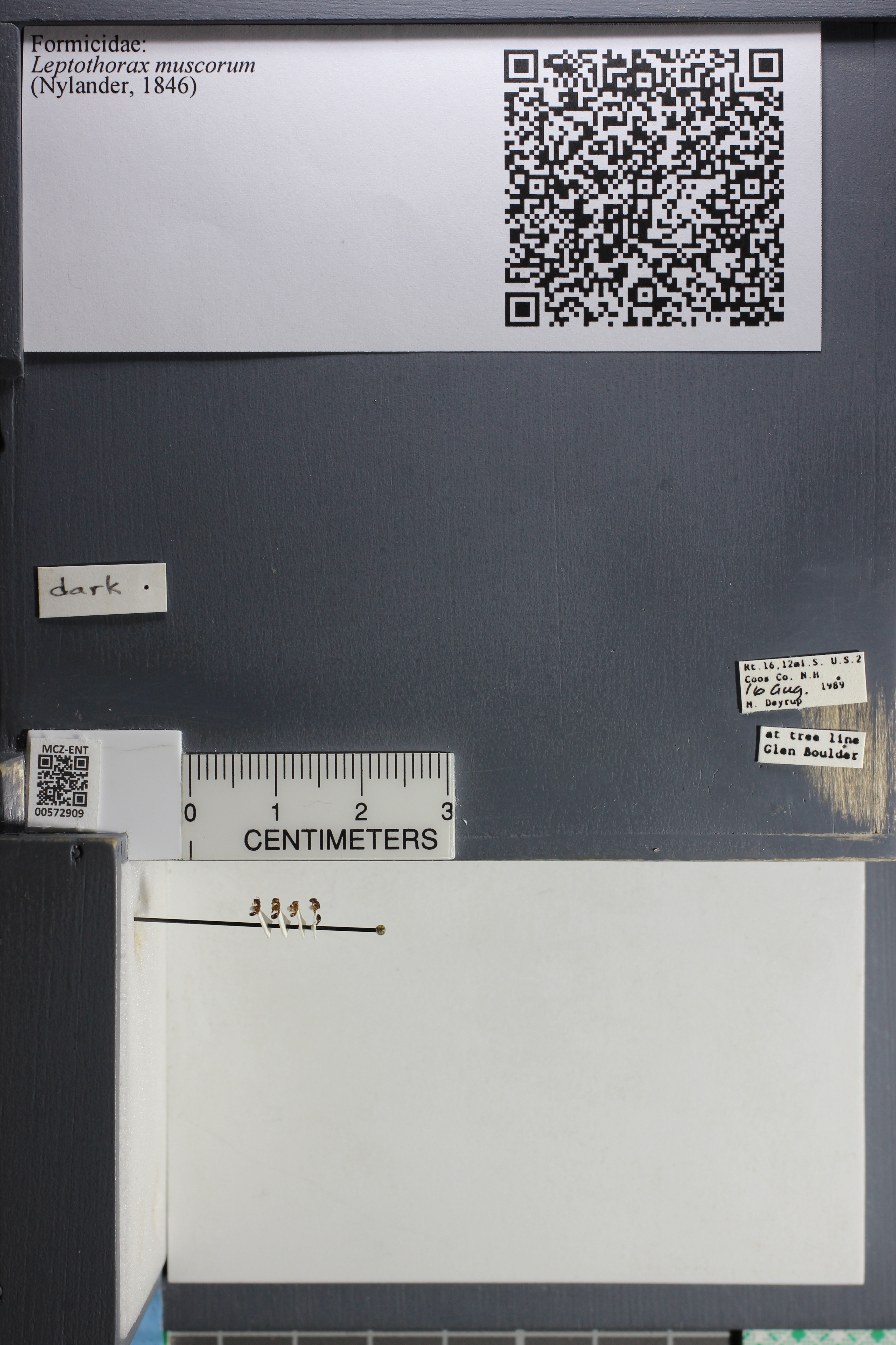 http://mczbase.mcz.harvard.edu/specimen_images/ent-formicidae/datashot/2015_08_12/IMG_334707.JPG